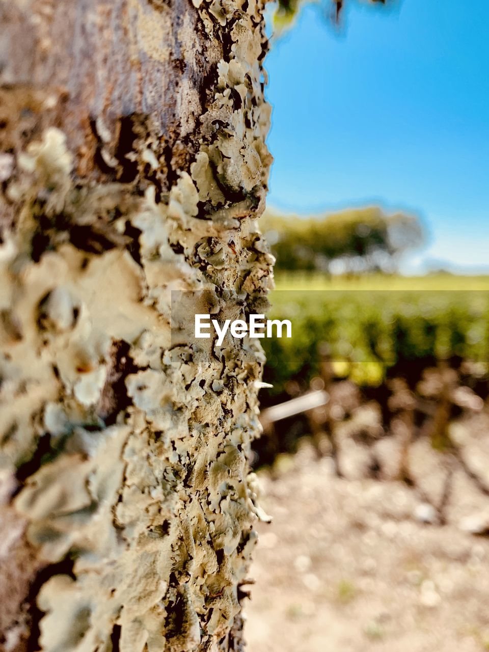 plant, close-up, trunk, nature, tree trunk, day, tree, focus on foreground, growth, beauty in nature, field, land, no people, outdoors, selective focus, sunlight, textured, tranquility, bark, rough, lichen