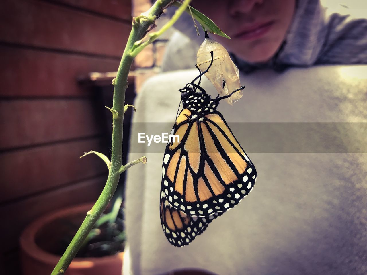 insect, invertebrate, animal wildlife, animal wing, animals in the wild, animal, animal themes, close-up, butterfly - insect, beauty in nature, one animal, focus on foreground, day, animal markings, nature, one person, human hand, human body part, hand, outdoors, butterfly, finger