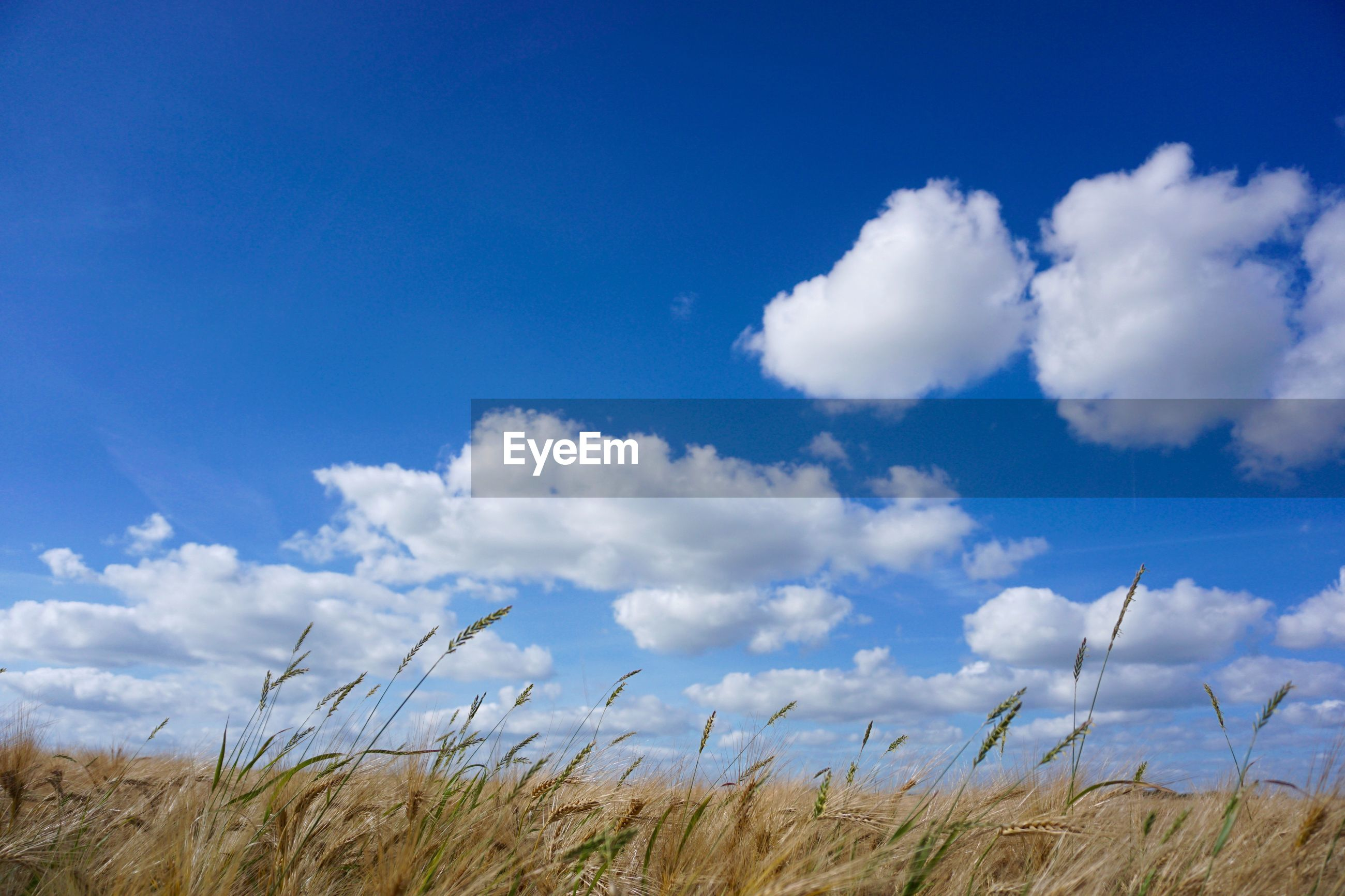 SCENIC VIEW OF BLUE SKY OVER FIELD