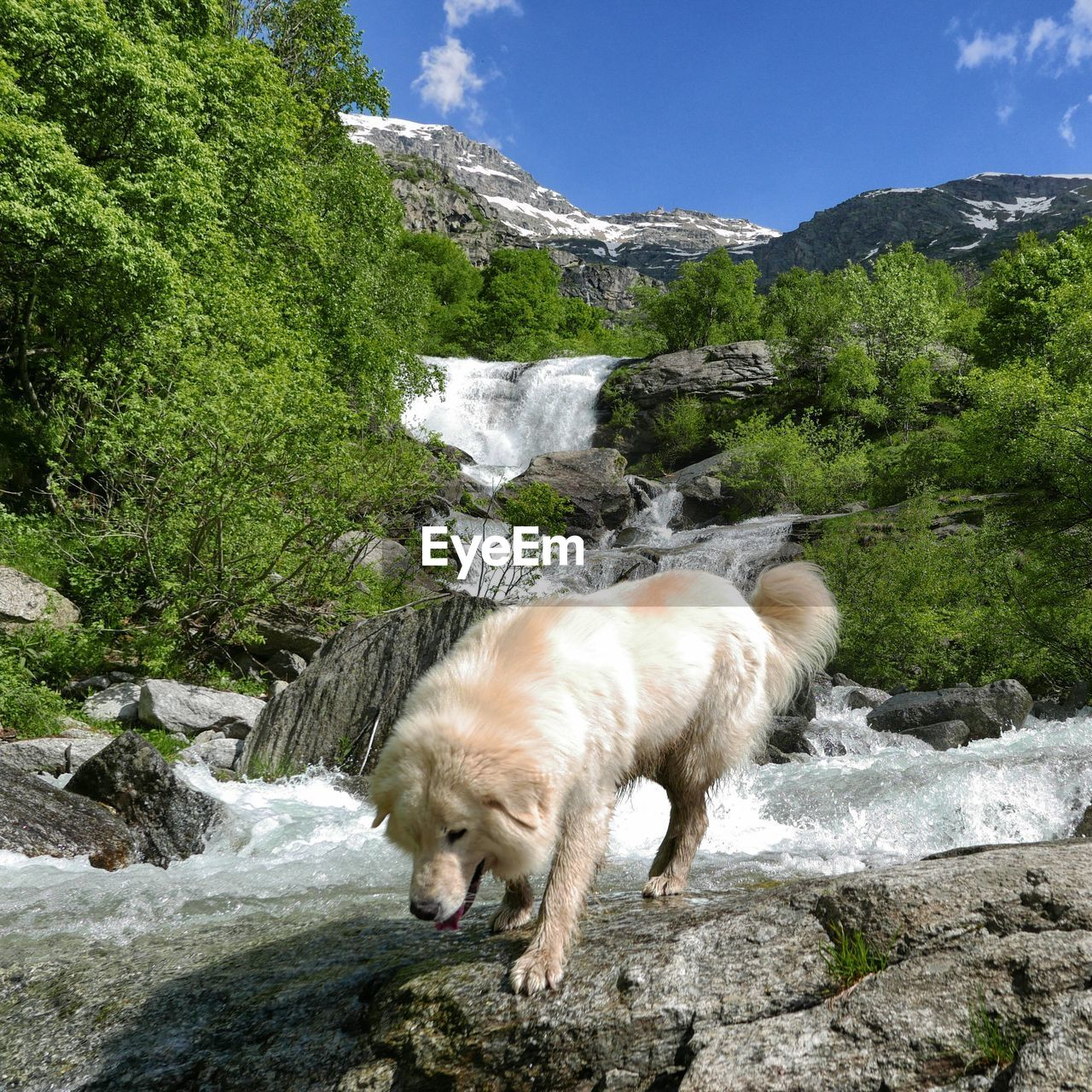 mammal, rock, one animal, water, solid, pets, rock - object, nature, animal themes, animal, beauty in nature, scenics - nature, mountain, plant, domestic animals, motion, domestic, day, vertebrate, flowing water, no people, outdoors, flowing