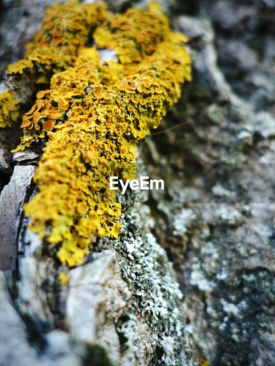 Macro shot of moss on wood