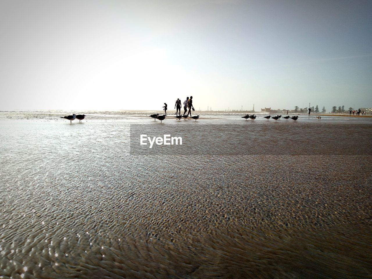 water, sea, sky, beach, beauty in nature, nature, real people, land, day, scenics - nature, clear sky, group of people, horizon, men, nautical vessel, transportation, lifestyles, sand, leisure activity, outdoors, horizon over water