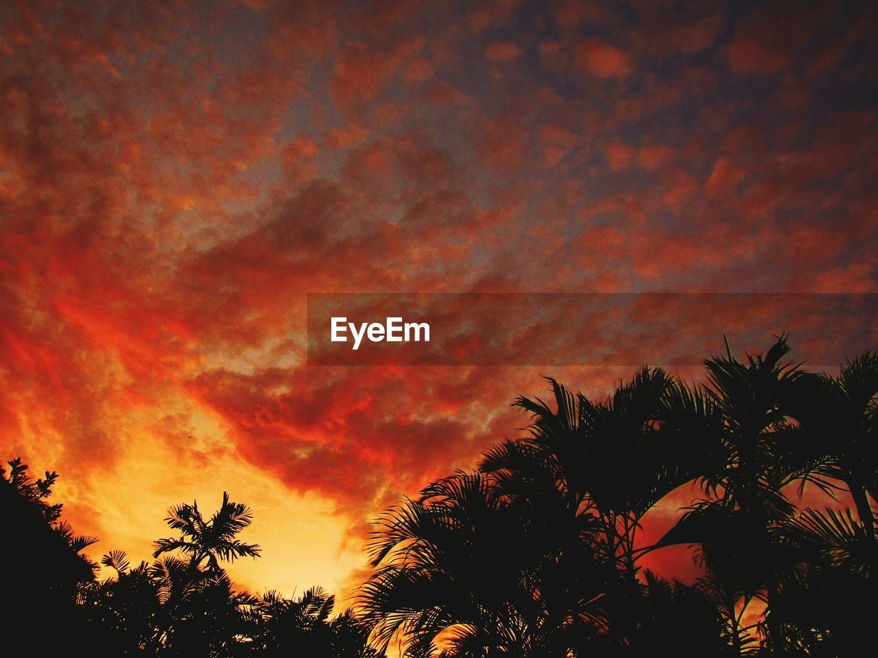 sky, sunset, tree, cloud - sky, beauty in nature, plant, orange color, scenics - nature, low angle view, silhouette, tranquility, tranquil scene, palm tree, growth, tropical climate, no people, nature, idyllic, outdoors, dramatic sky, treetop, romantic sky