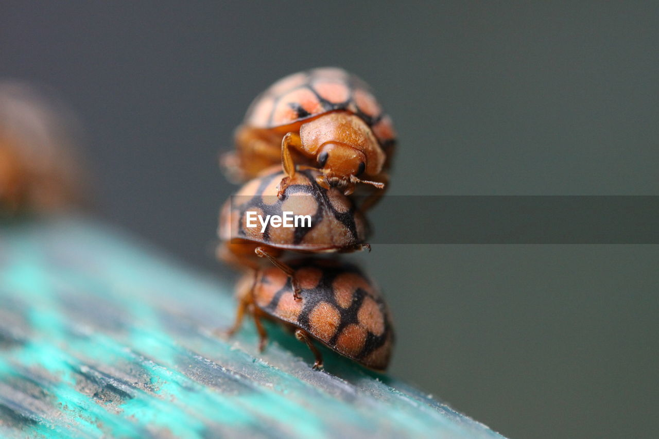 animal wildlife, animals in the wild, animal themes, animal, one animal, close-up, invertebrate, selective focus, no people, nature, insect, zoology, day, outdoors, beetle, wood - material, copy space, animal markings