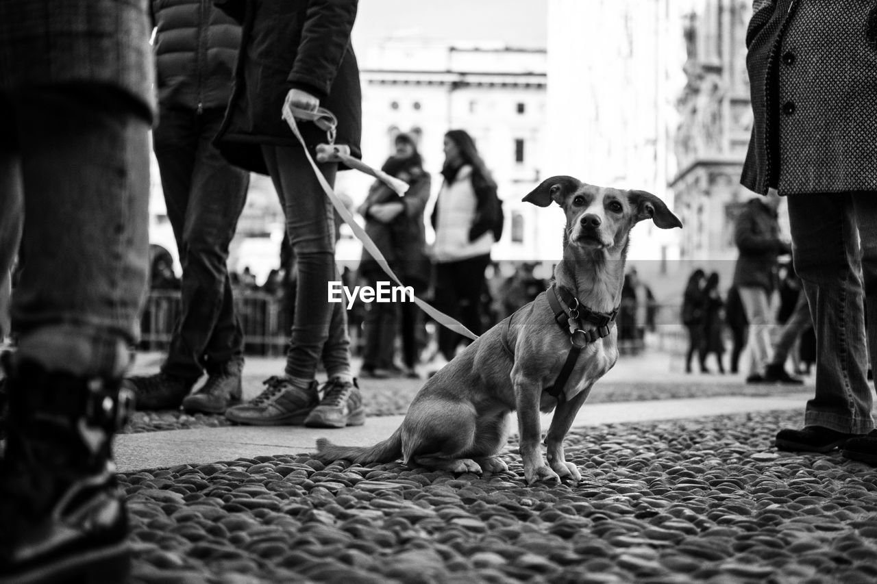 pets, domestic, canine, dog, domestic animals, one animal, mammal, low section, real people, vertebrate, city, human leg, group of people, incidental people, men, leash, focus on foreground, street, body part, pet owner, outdoors