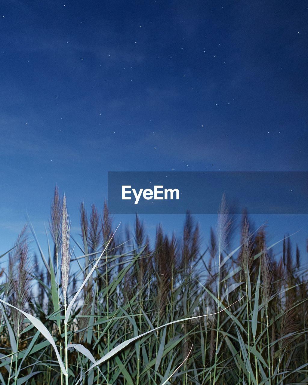 Close-up of grass against blue sky