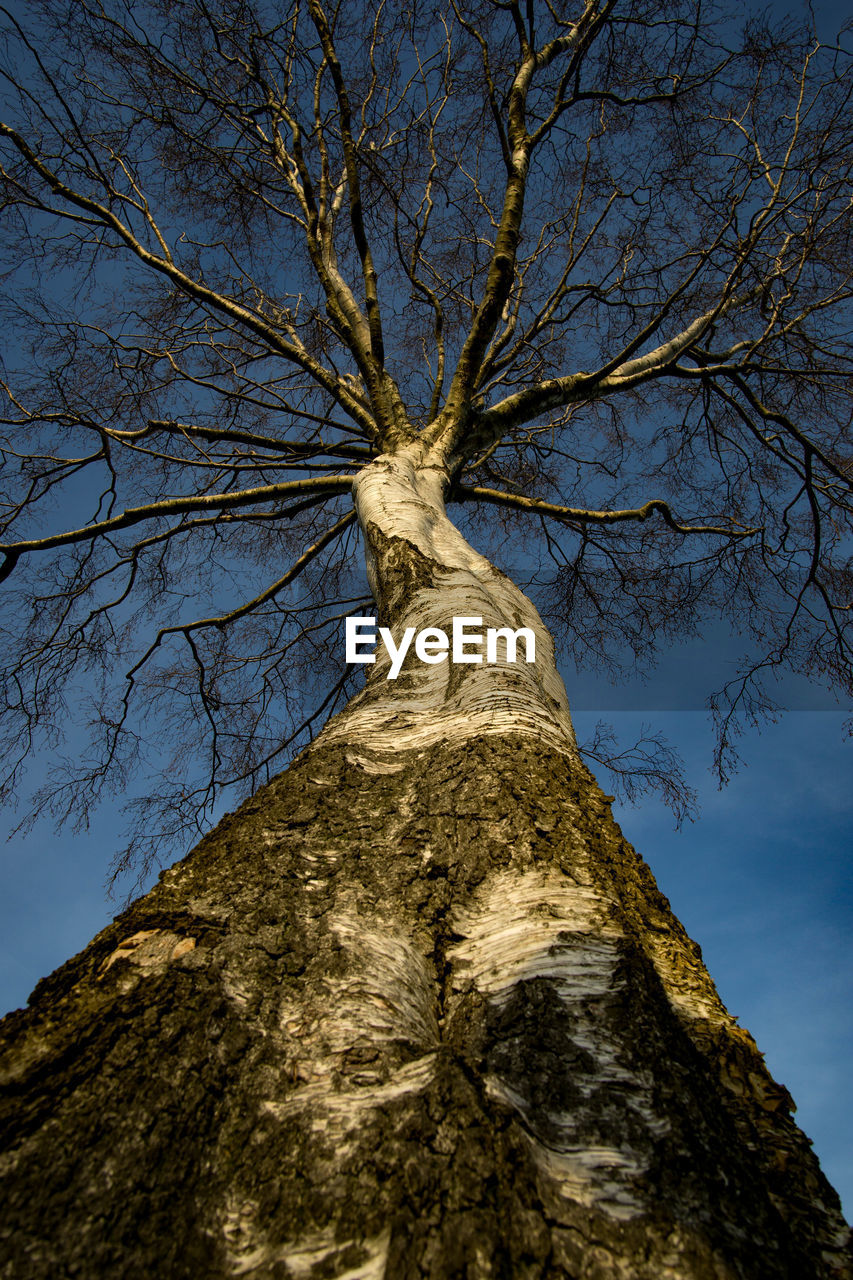 tree, low angle view, sky, tree trunk, branch, plant, trunk, bare tree, nature, no people, day, tall - high, outdoors, cloud - sky, tranquility, beauty in nature, directly below, textured, growth, bark