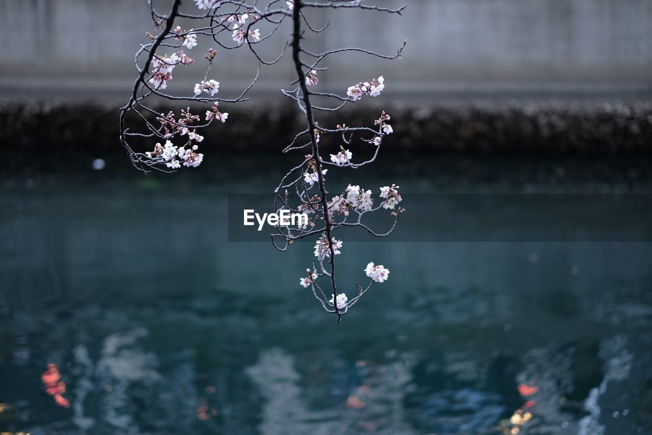 Flowers growing on branch over lake