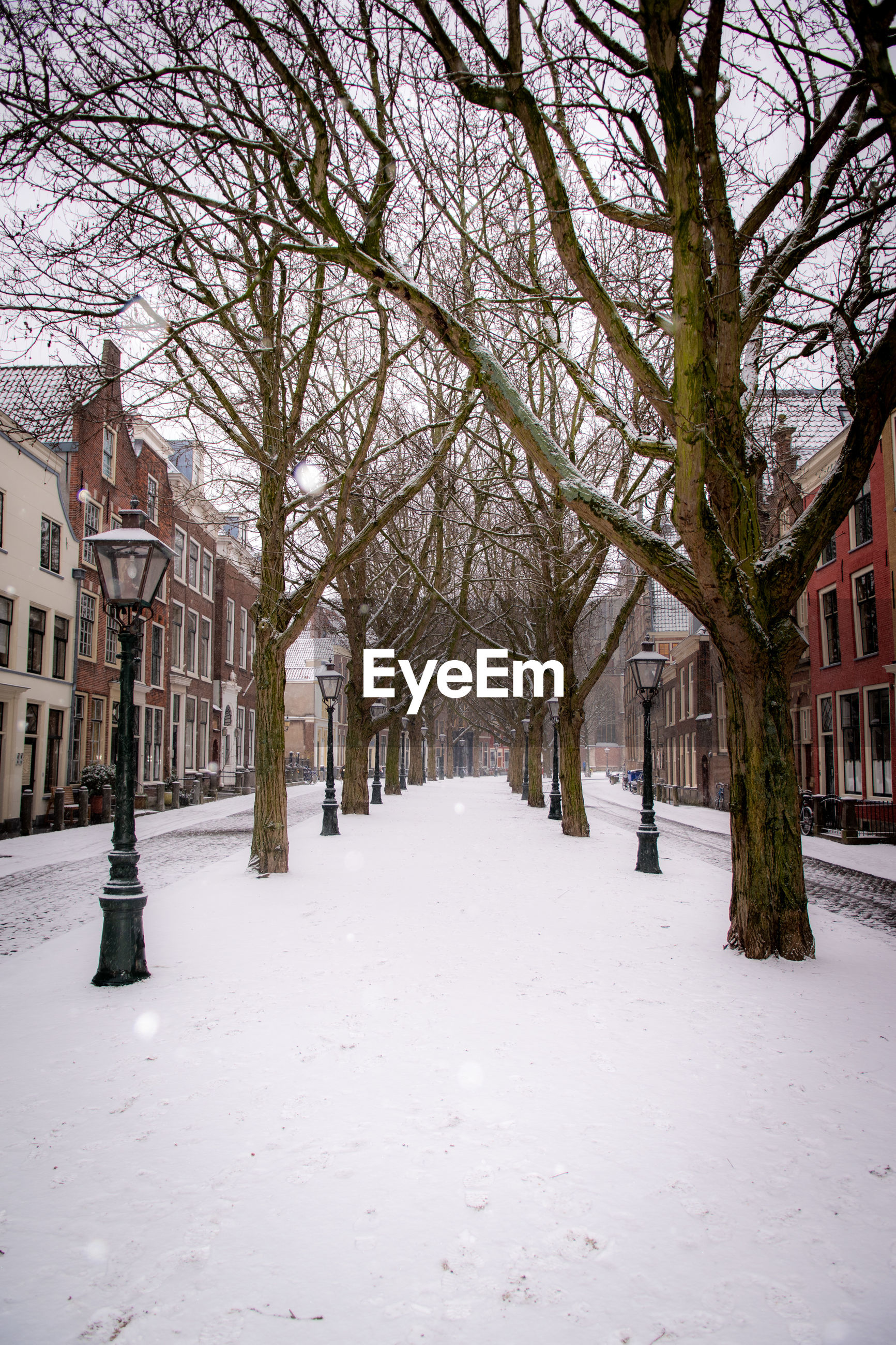 Snow covered footpath amidst trees and buildings during winter