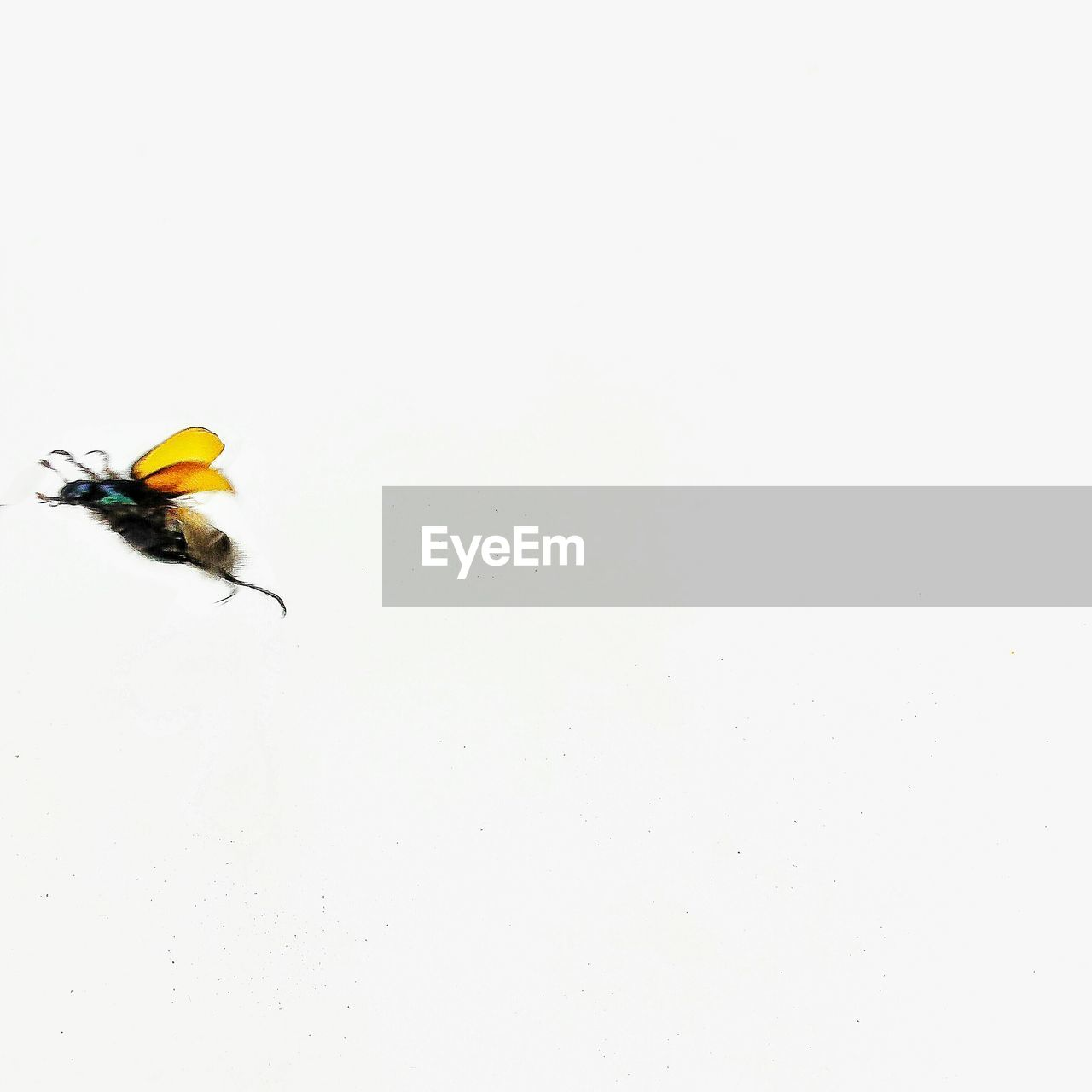 YELLOW INSECT FLYING OVER WHITE BACKGROUND