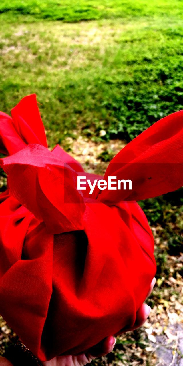 red, plant, nature, growth, day, grass, close-up, field, land, focus on foreground, no people, flowering plant, flower, freshness, outdoors, beauty in nature, park, petal, sunlight, park - man made space, flower head