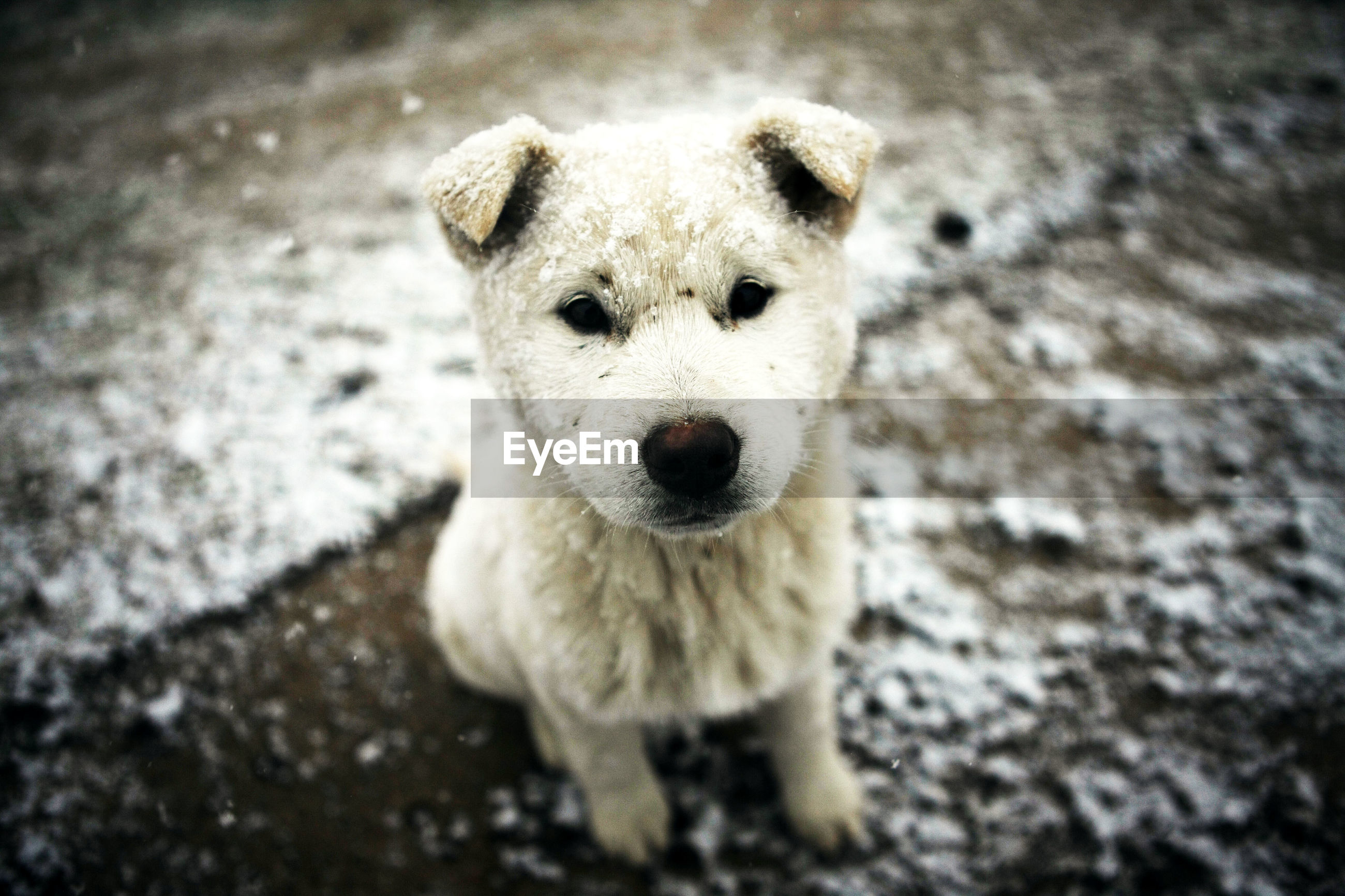 Portrait of puppy on field during winter