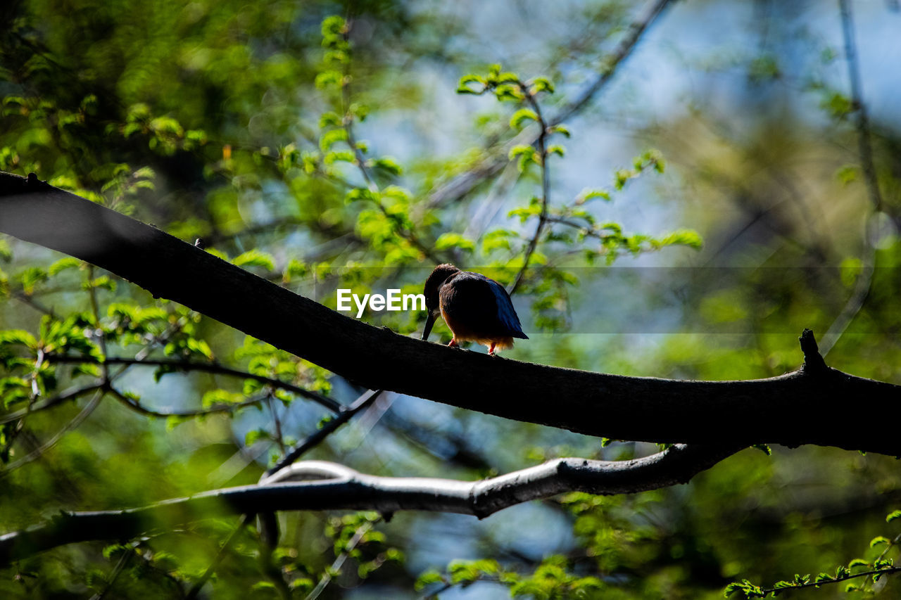 animals in the wild, tree, animal themes, vertebrate, animal wildlife, animal, one animal, branch, bird, plant, perching, no people, nature, low angle view, outdoors, day, selective focus, focus on foreground, beauty in nature, zoology