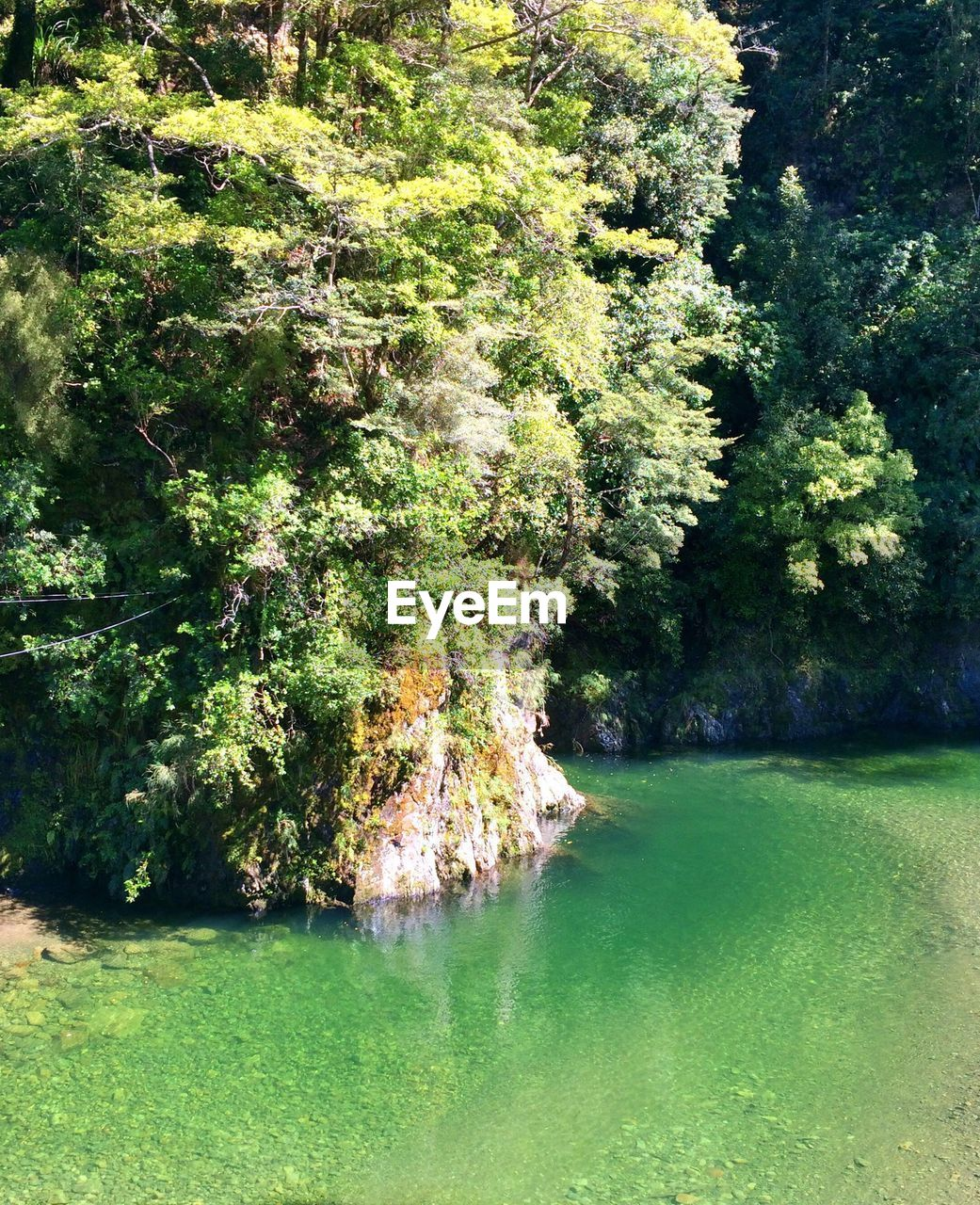 Overgrown rock in still green water