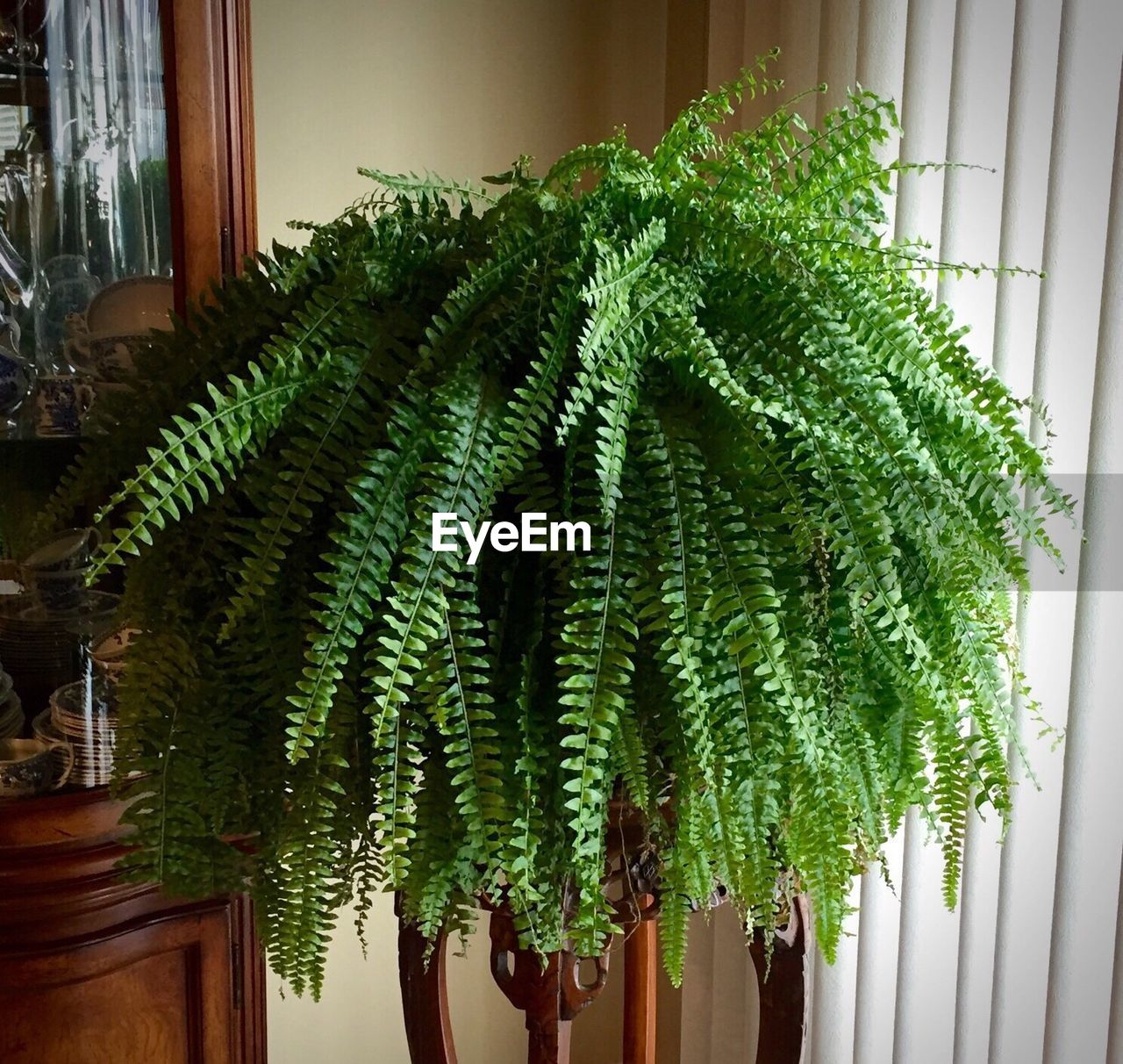 Plant By Shelf At Home