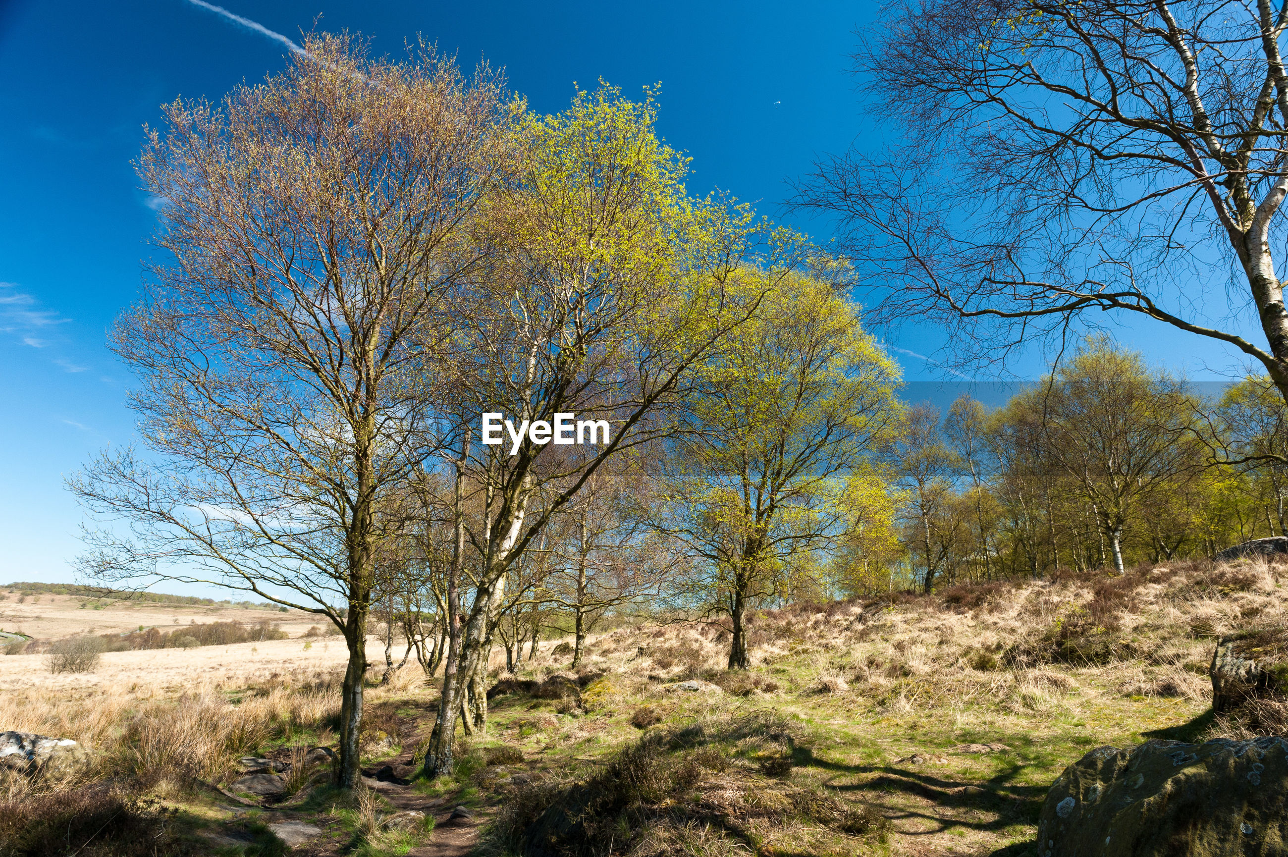 TREES GROWING ON GRASSY FIELD AGAINST CLEAR SKY