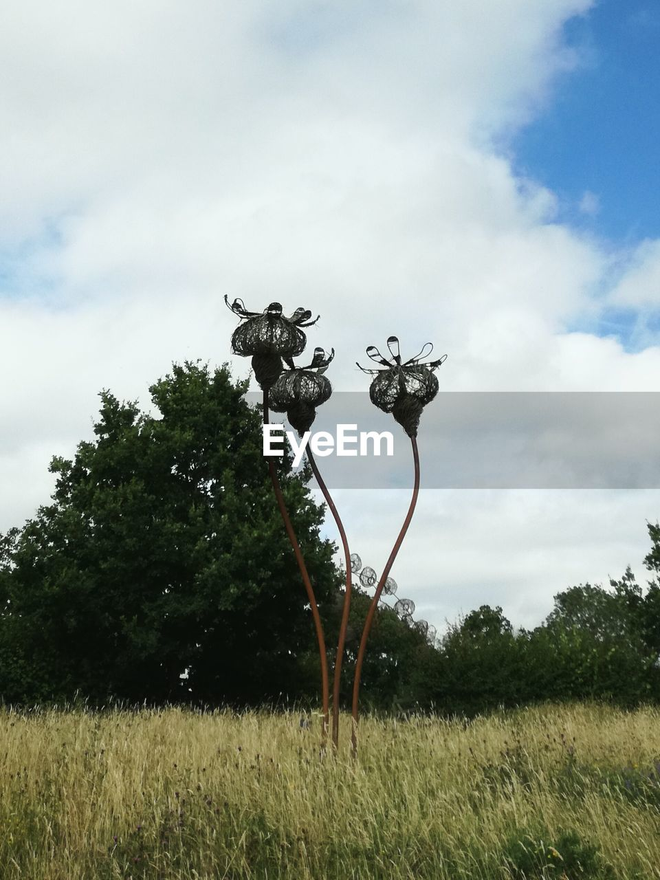 tree, sky, cloud - sky, growth, field, nature, day, outdoors, no people, tranquility, beauty in nature, landscape, grass, dead tree