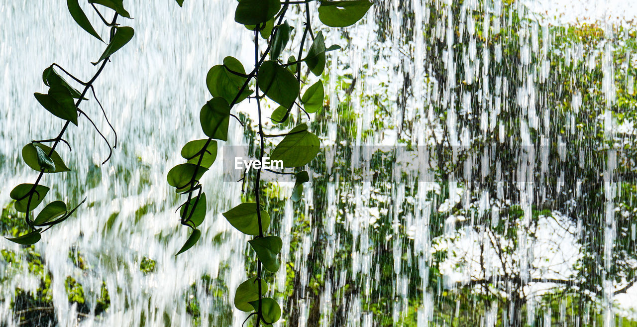 plant, growth, green color, beauty in nature, no people, nature, plant part, leaf, day, close-up, focus on foreground, freshness, outdoors, sunlight, tranquility, fragility, vulnerability, white color, water, plant stem