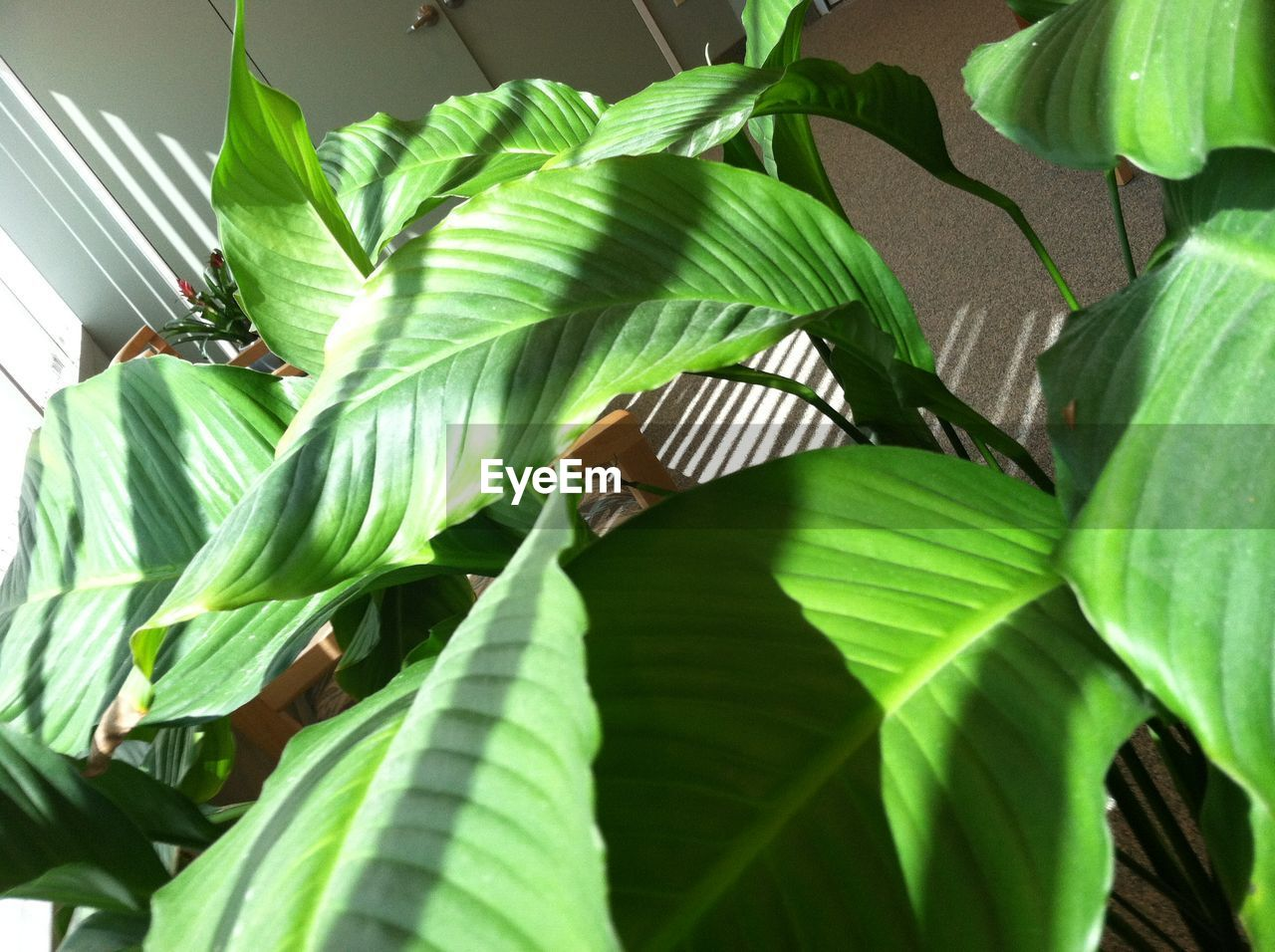 leaf, green color, growth, banana tree, banana leaf, nature, one animal, animal themes, animals in the wild, plant, day, no people, beauty in nature, close-up, outdoors, tree, bird, freshness