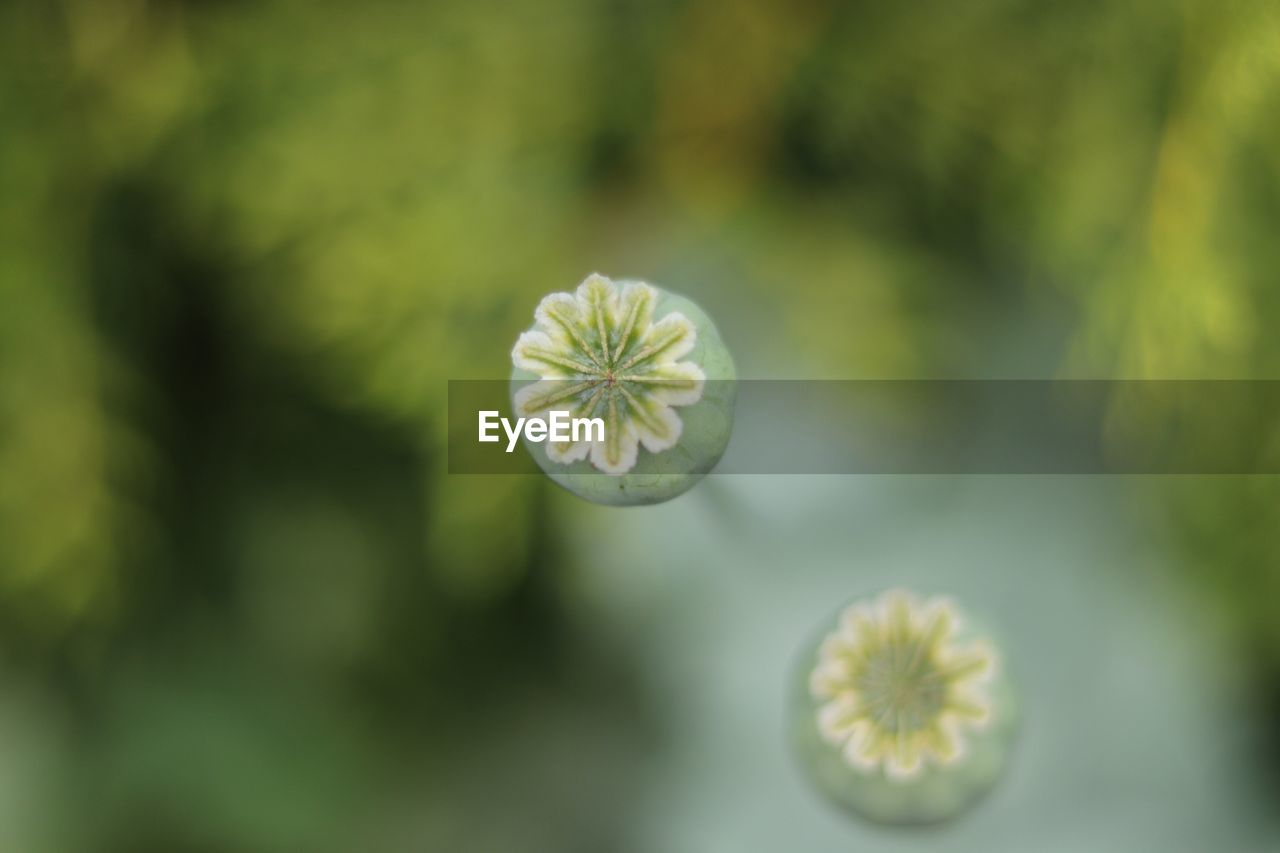 flower, plant, growth, flowering plant, beauty in nature, freshness, fragility, vulnerability, close-up, green color, no people, flower head, inflorescence, focus on foreground, selective focus, day, nature, petal, outdoors, yellow