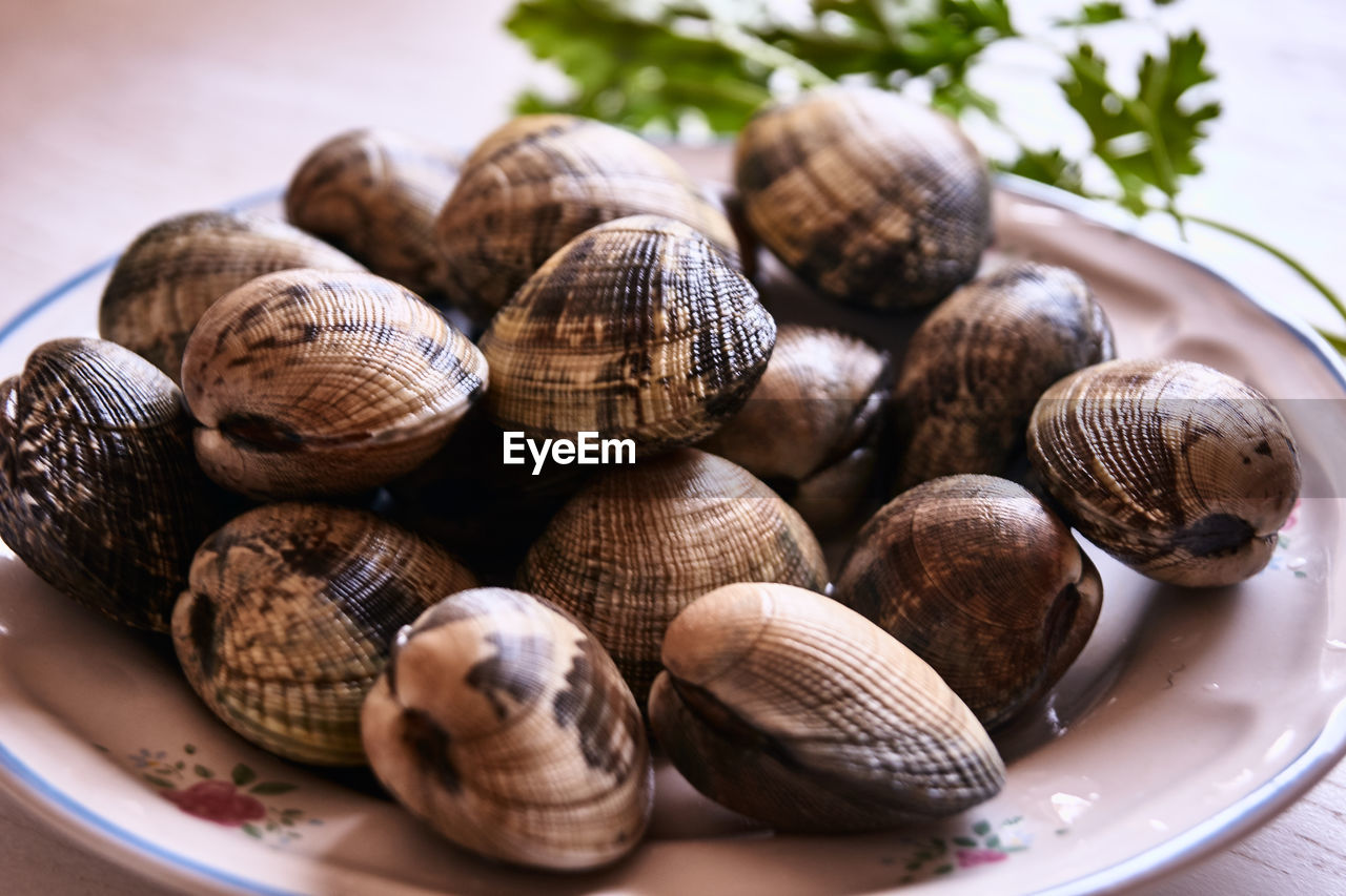 CLOSE-UP OF SNAILS IN SEASHELLS
