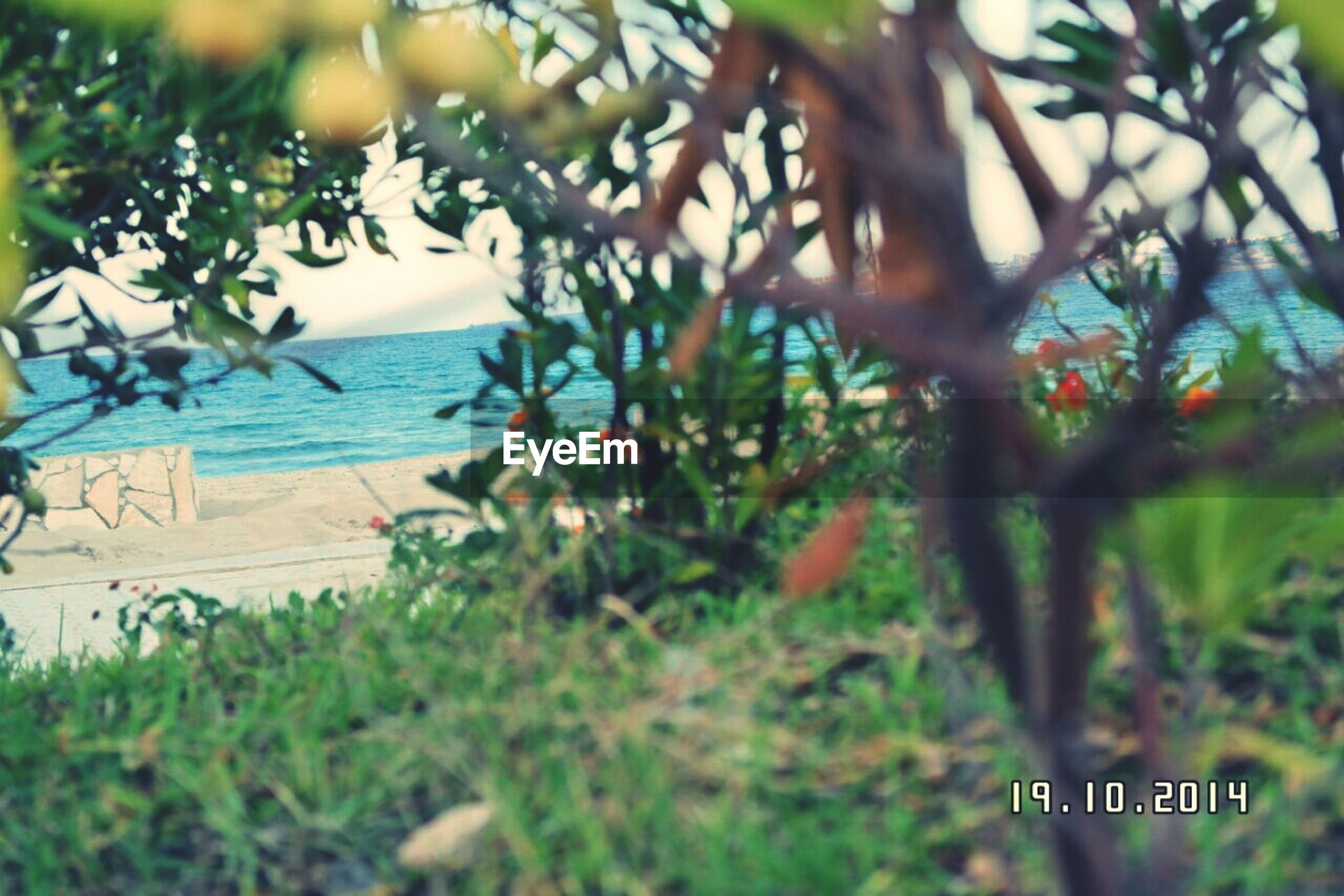 tree, growth, water, plant, nature, tranquility, green color, tranquil scene, text, focus on foreground, sea, day, branch, beauty in nature, outdoors, beach, no people, scenics, leaf, close-up
