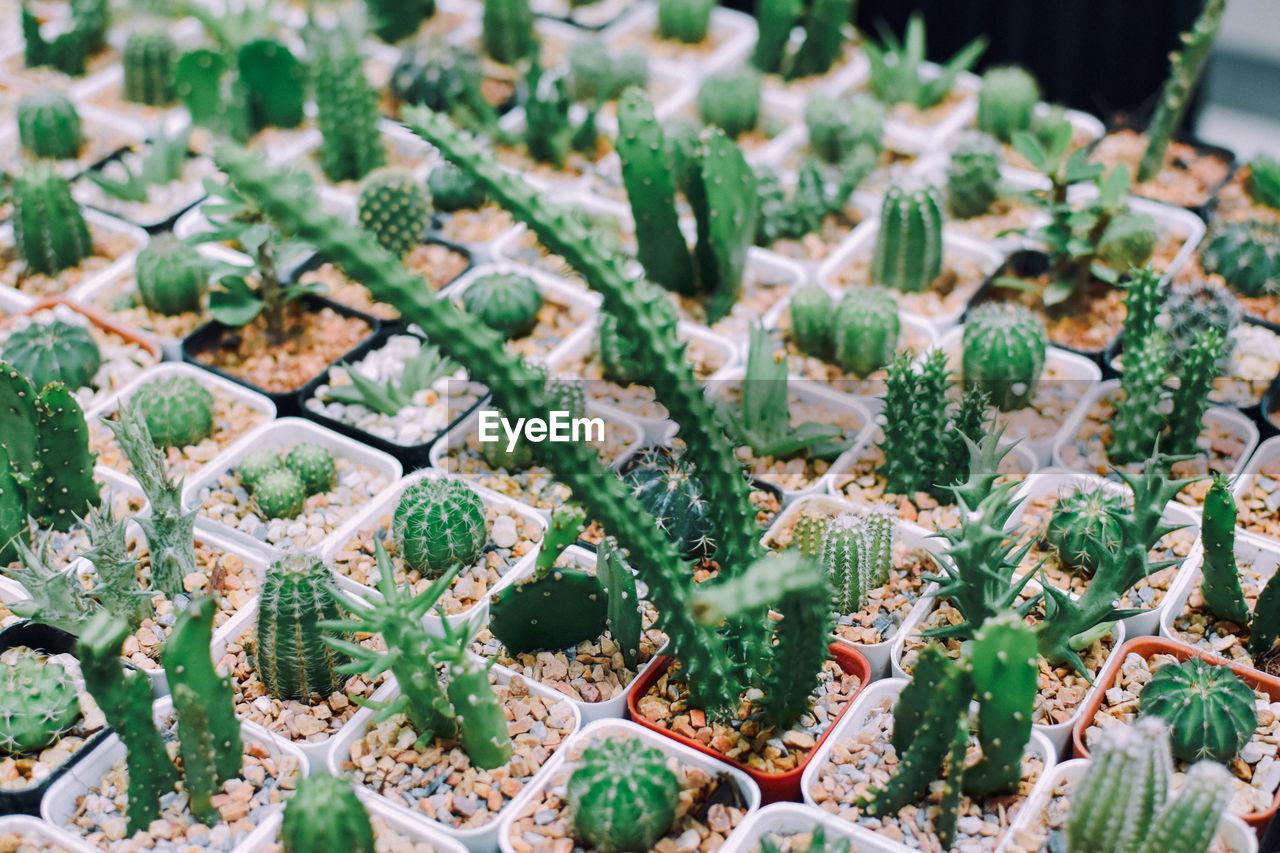 Close-Up Of Succulent Plants