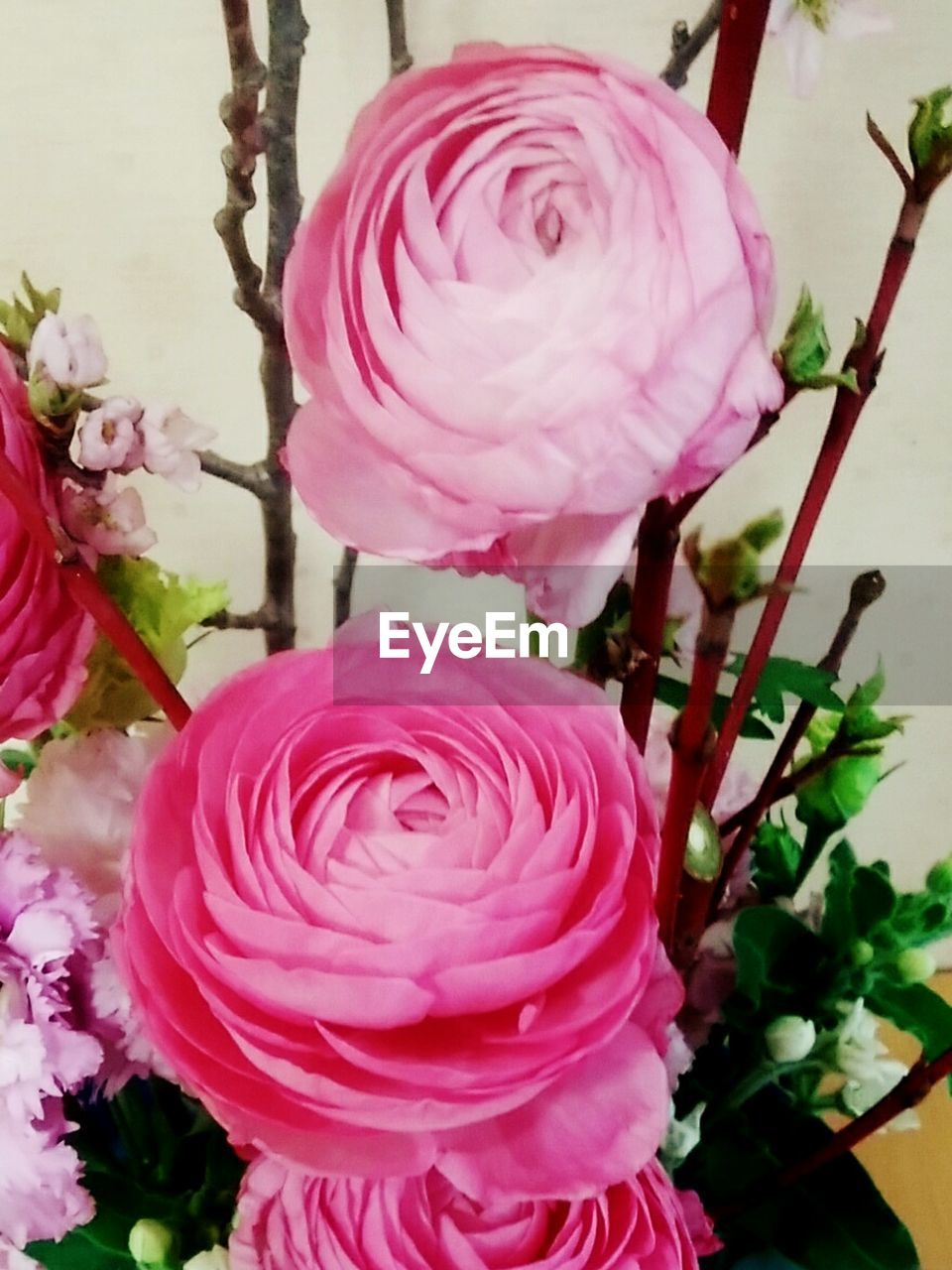 flower, fragility, beauty in nature, petal, growth, freshness, nature, flower head, rose - flower, pink color, no people, blossom, plant, close-up, day, springtime, outdoors, blooming