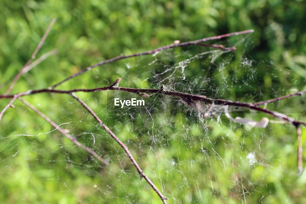 spider web, nature, no people, green color, close-up, animal themes, web, day, focus on foreground, outdoors, leaf, one animal, insect, spider, animals in the wild, plant, growth, fragility, freshness