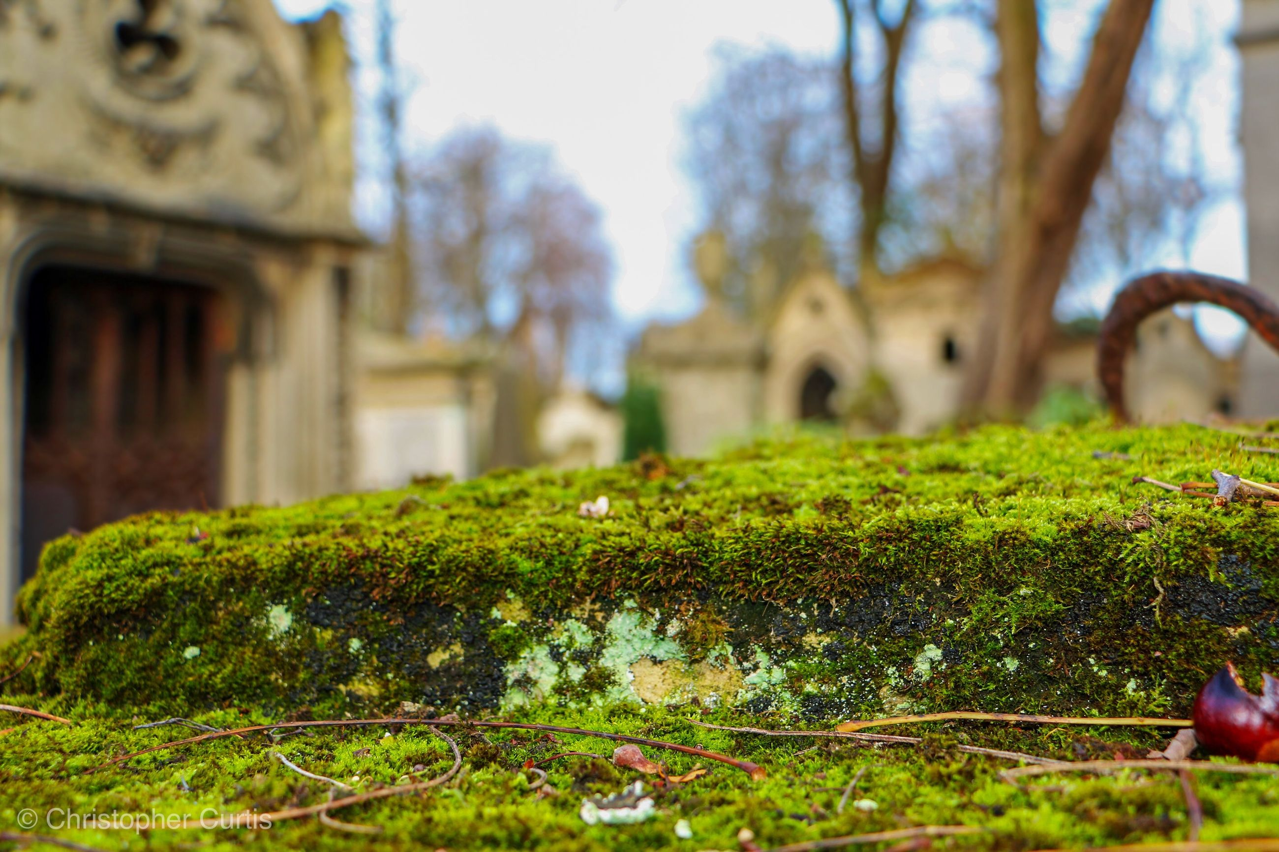 CLOSE-UP OF MOSS GROWING ON PLANT IN GARDEN