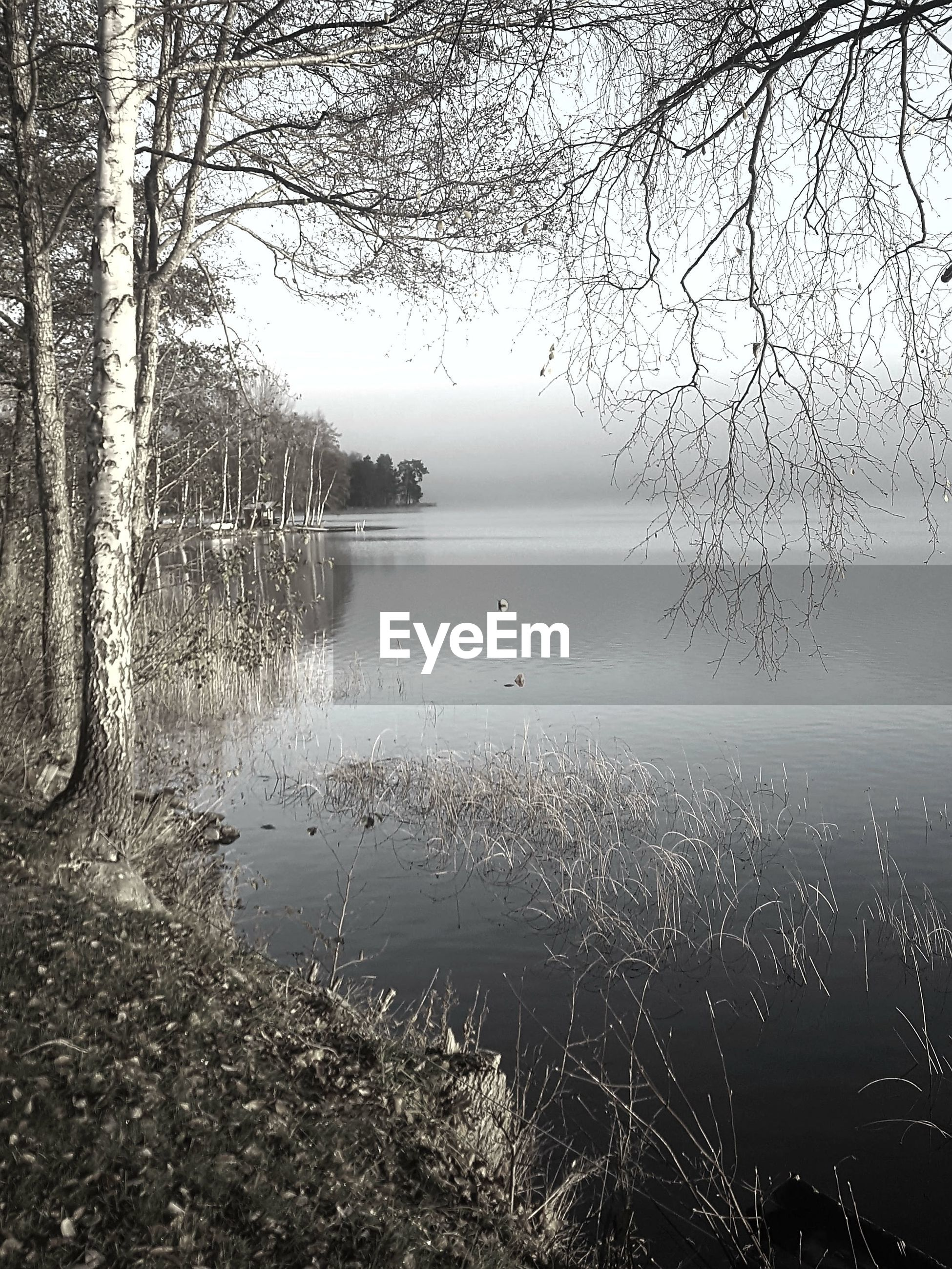 SCENIC VIEW OF LAKE AGAINST BARE TREES IN FOGGY WEATHER
