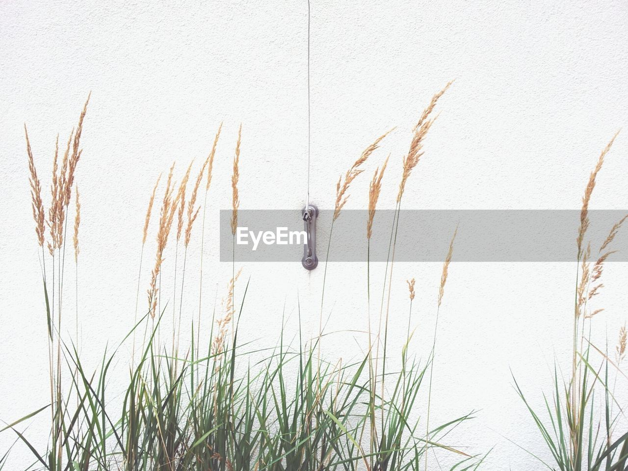 Plants growing against white wall