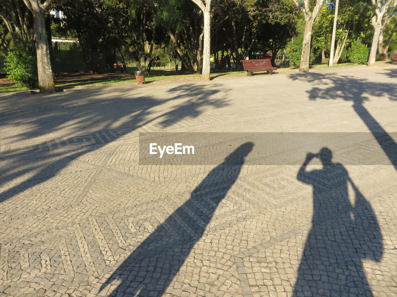 shadow, sunlight, nature, transportation, plant, tree, focus on shadow, day, two people, city, real people, men, togetherness, road, outdoors, street, unrecognizable person, motor vehicle, lifestyles, the way forward, long shadow - shadow