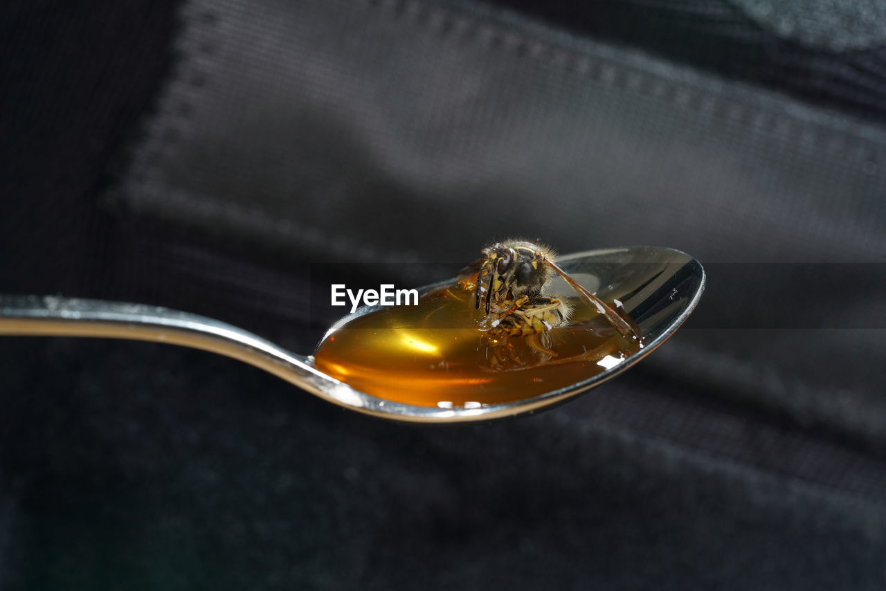 Close-up of bee on honey