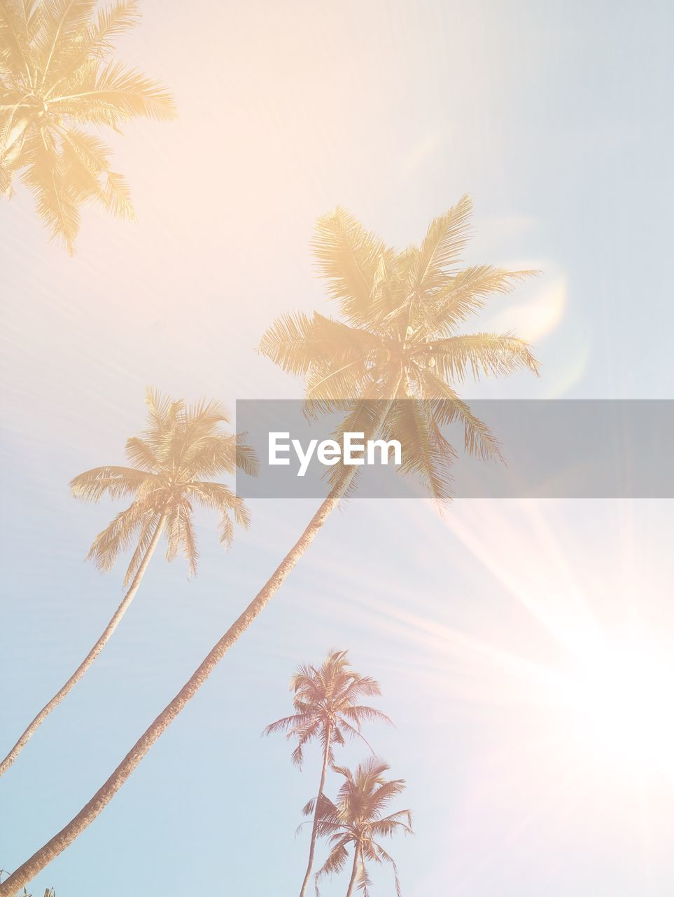 palm tree, low angle view, no people, tree, nature, flower, growth, day, sky, close-up, beauty in nature, outdoors, fragility, freshness, flower head
