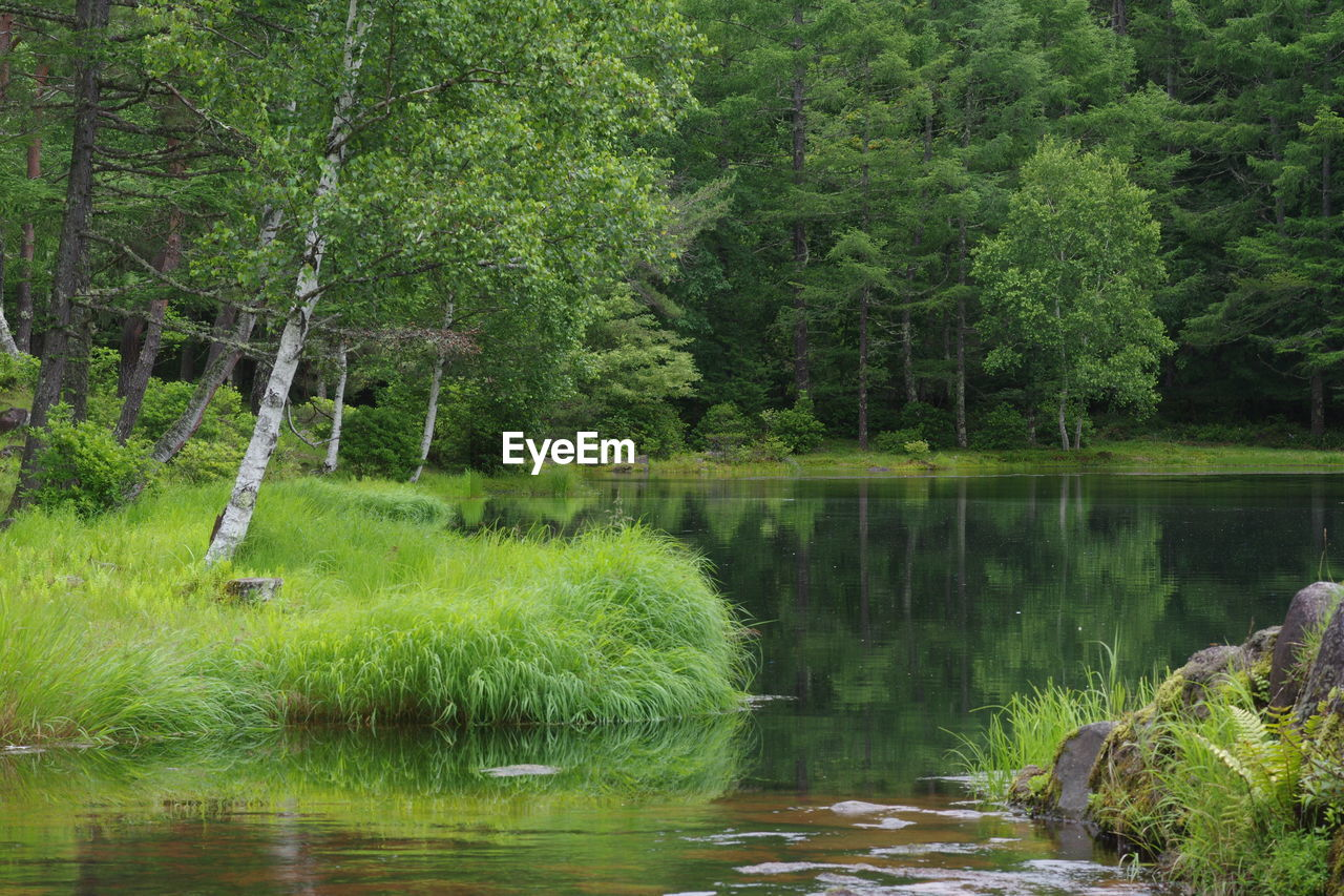 tree, plant, water, lake, forest, green color, reflection, tranquility, beauty in nature, tranquil scene, scenics - nature, nature, growth, land, no people, day, foliage, lush foliage, non-urban scene, outdoors, woodland, rainforest