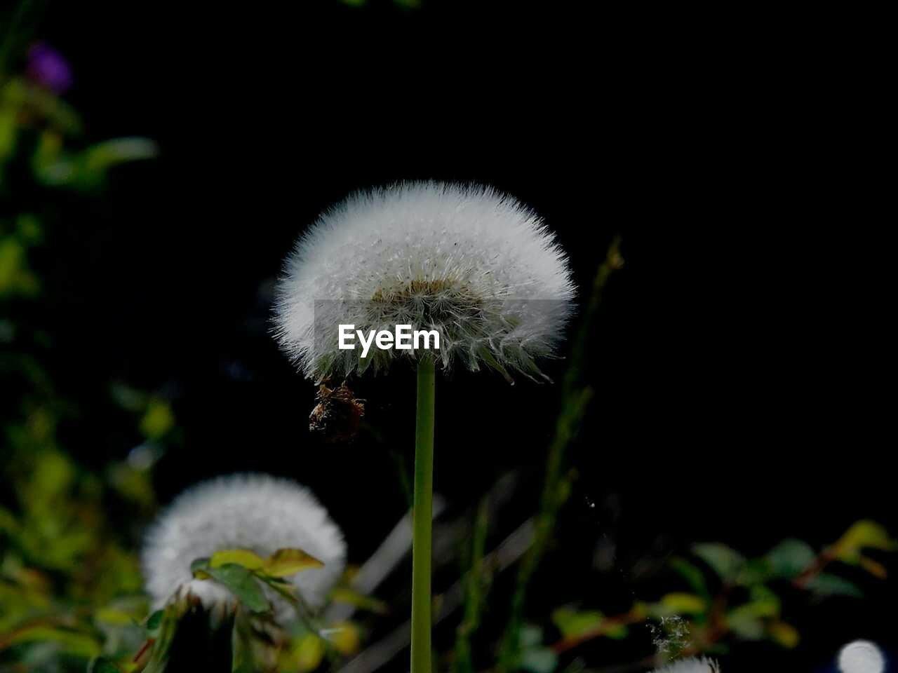 flower, growth, fragility, nature, white color, beauty in nature, softness, plant, close-up, freshness, outdoors, flower head, no people, day