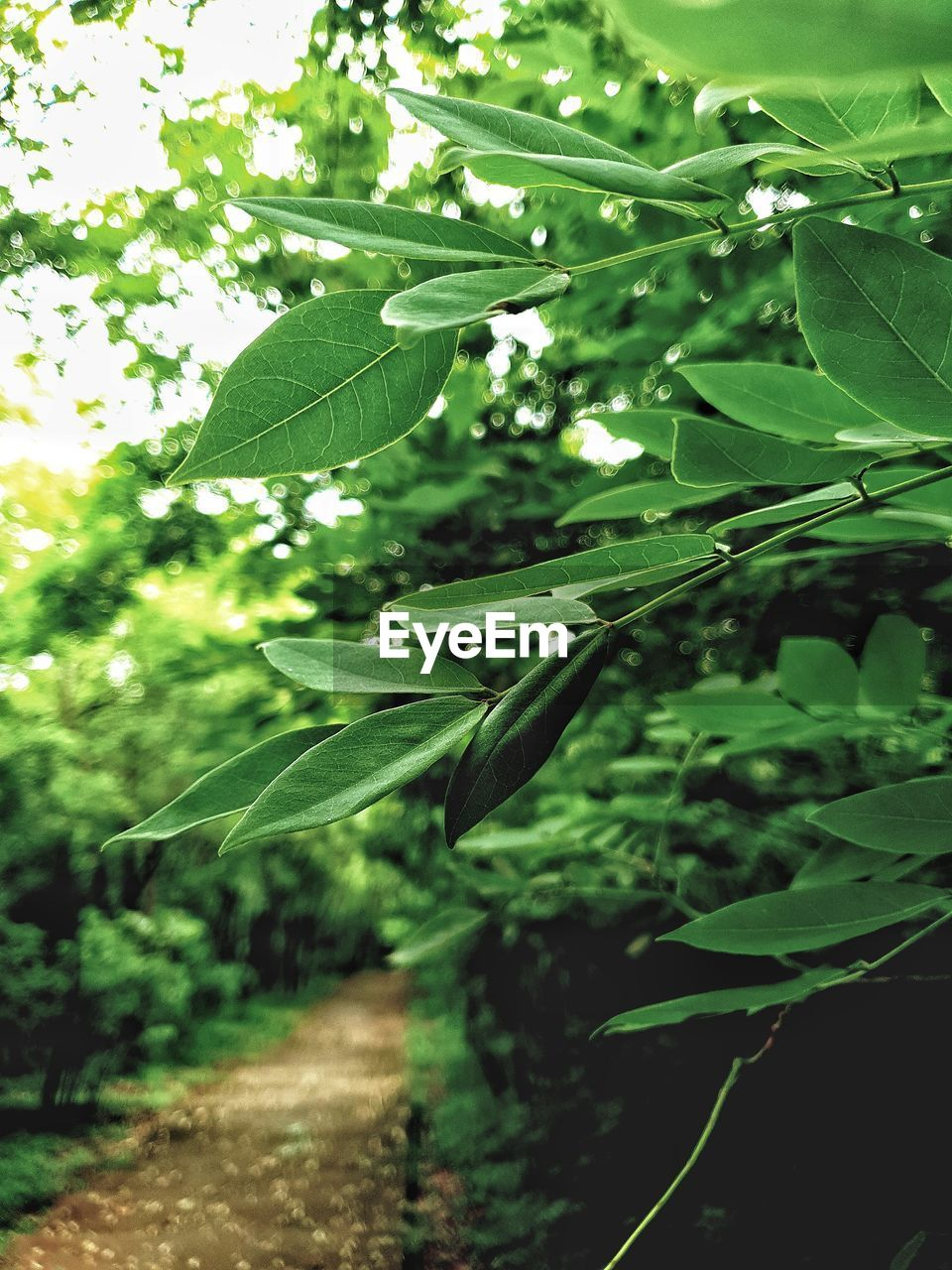 plant, leaf, plant part, growth, green color, nature, beauty in nature, no people, focus on foreground, close-up, day, tree, tranquility, outdoors, selective focus, sunlight, land, forest, freshness, branch