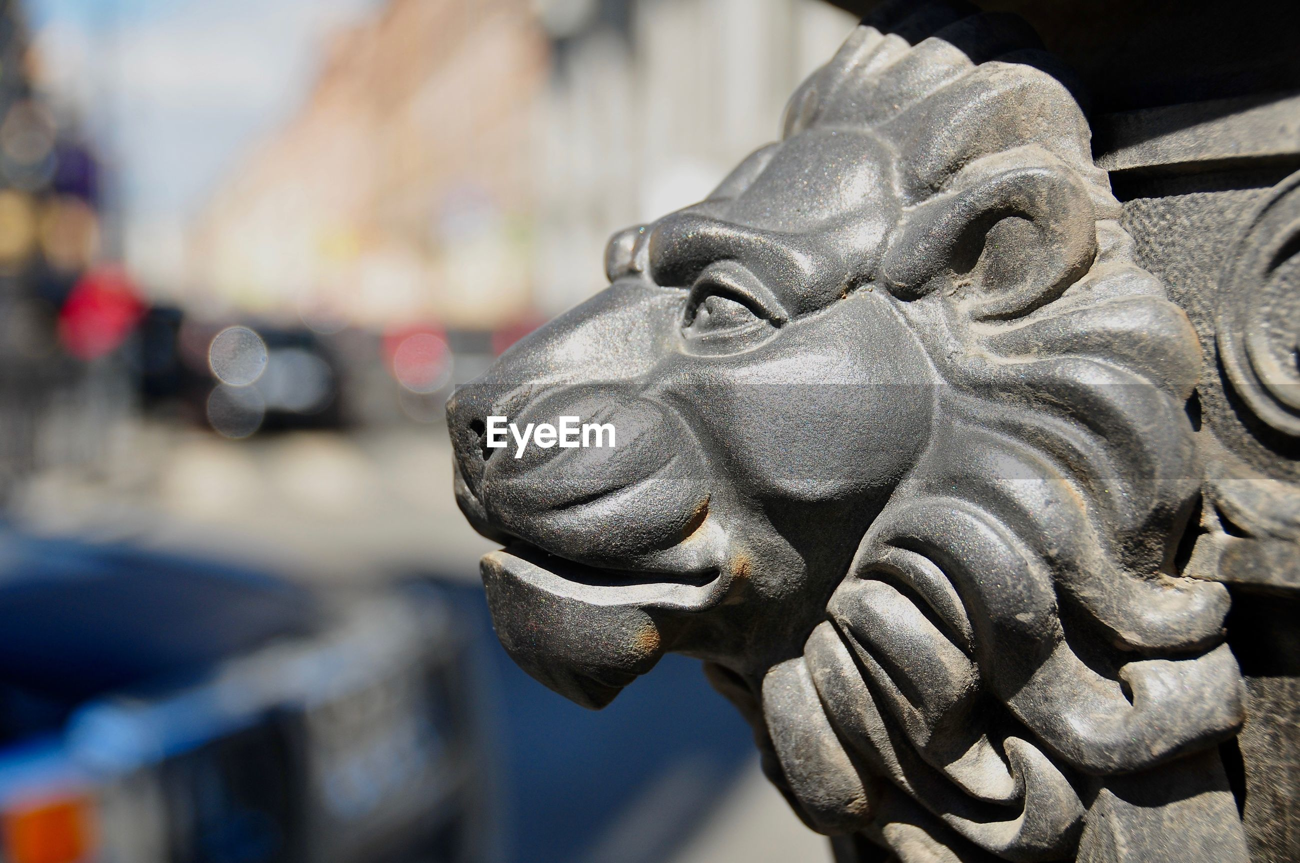 Close-up side view of lion head