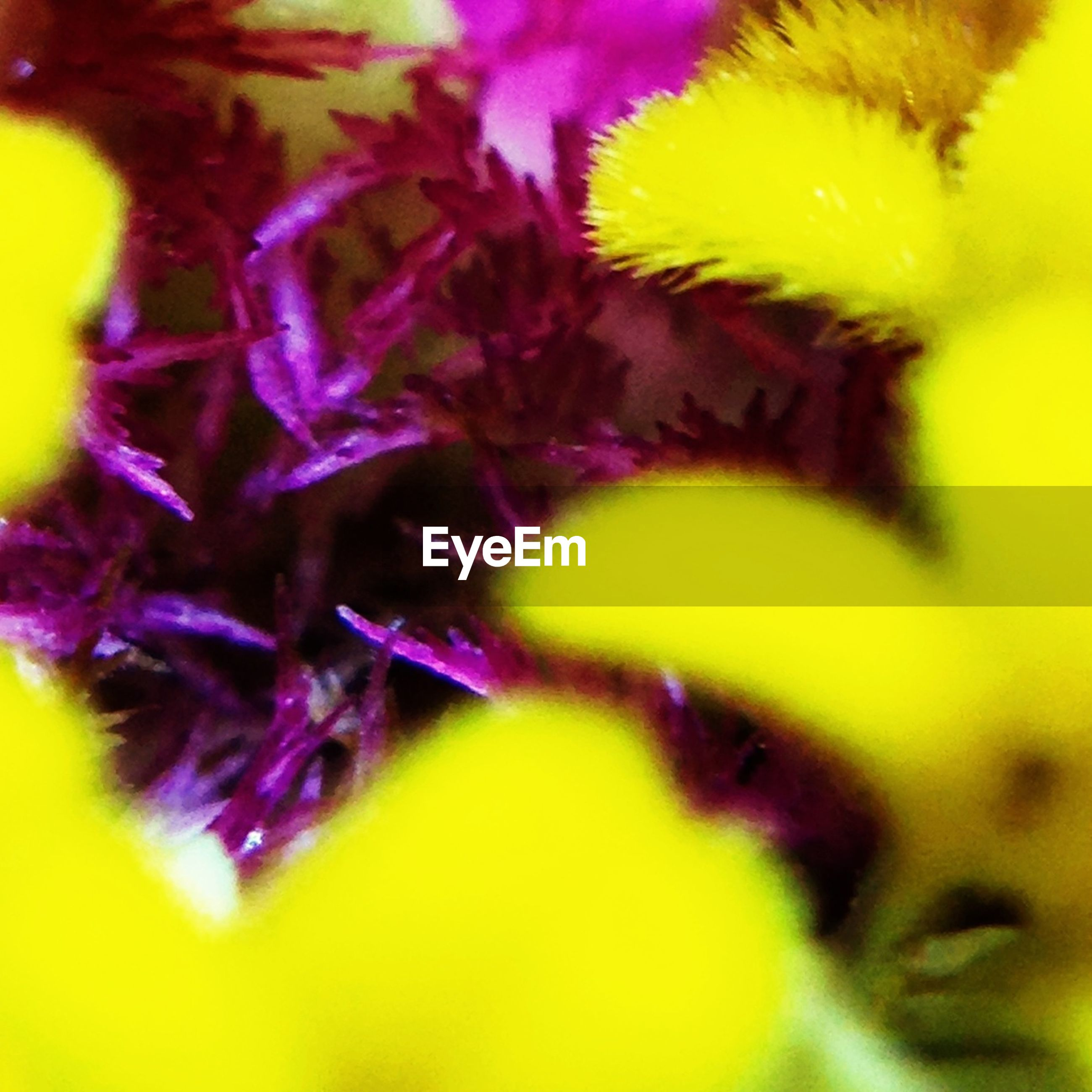 yellow, close-up, selective focus, flower, full frame, fragility, backgrounds, growth, extreme close-up, petal, nature, vibrant color, freshness, macro, no people, focus on foreground, beauty in nature, detail, plant, flower head