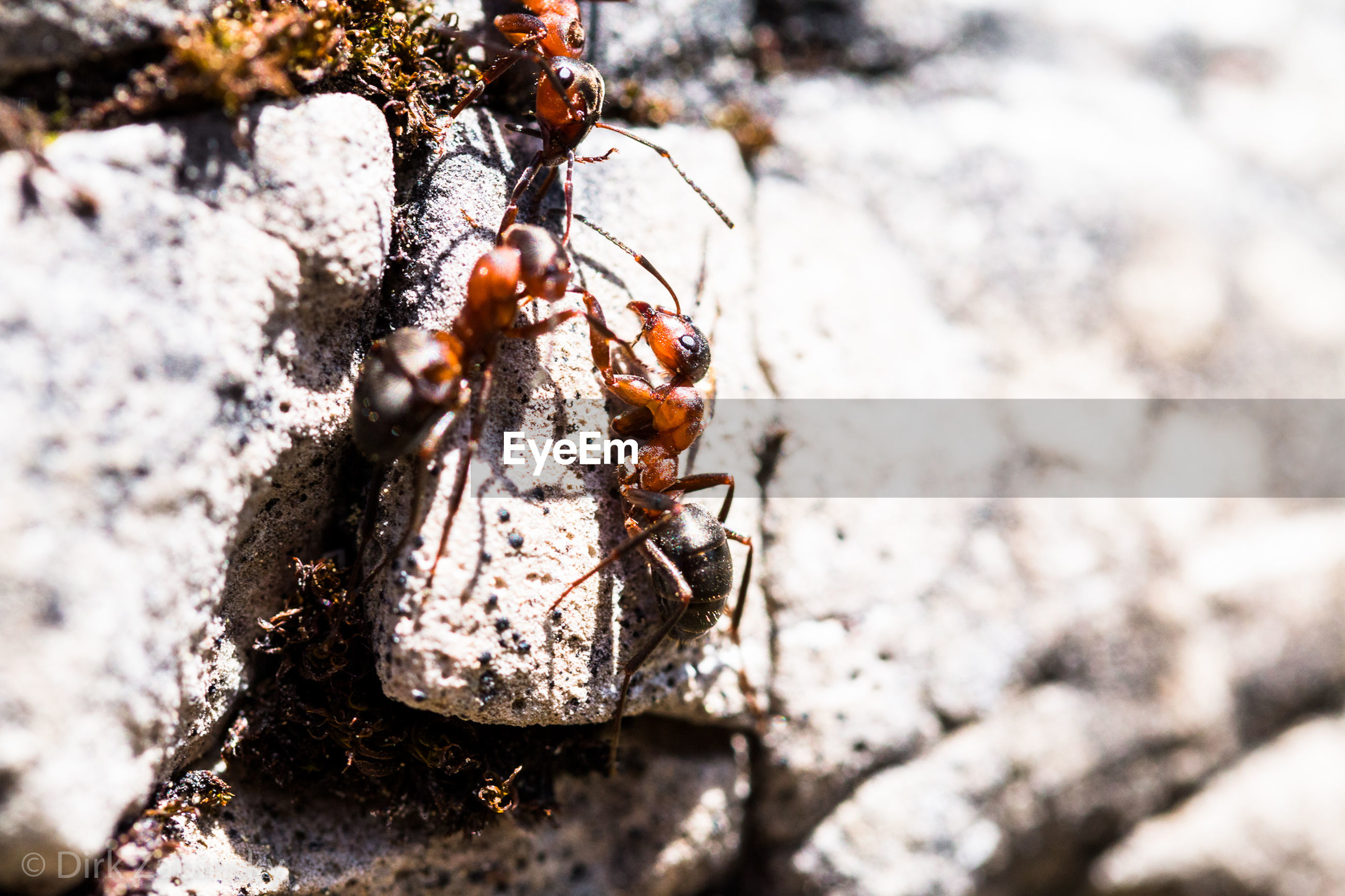 animal, animal themes, animal wildlife, invertebrate, close-up, animals in the wild, insect, day, nature, rock, no people, rock - object, one animal, solid, outdoors, focus on foreground, selective focus, winter, snow