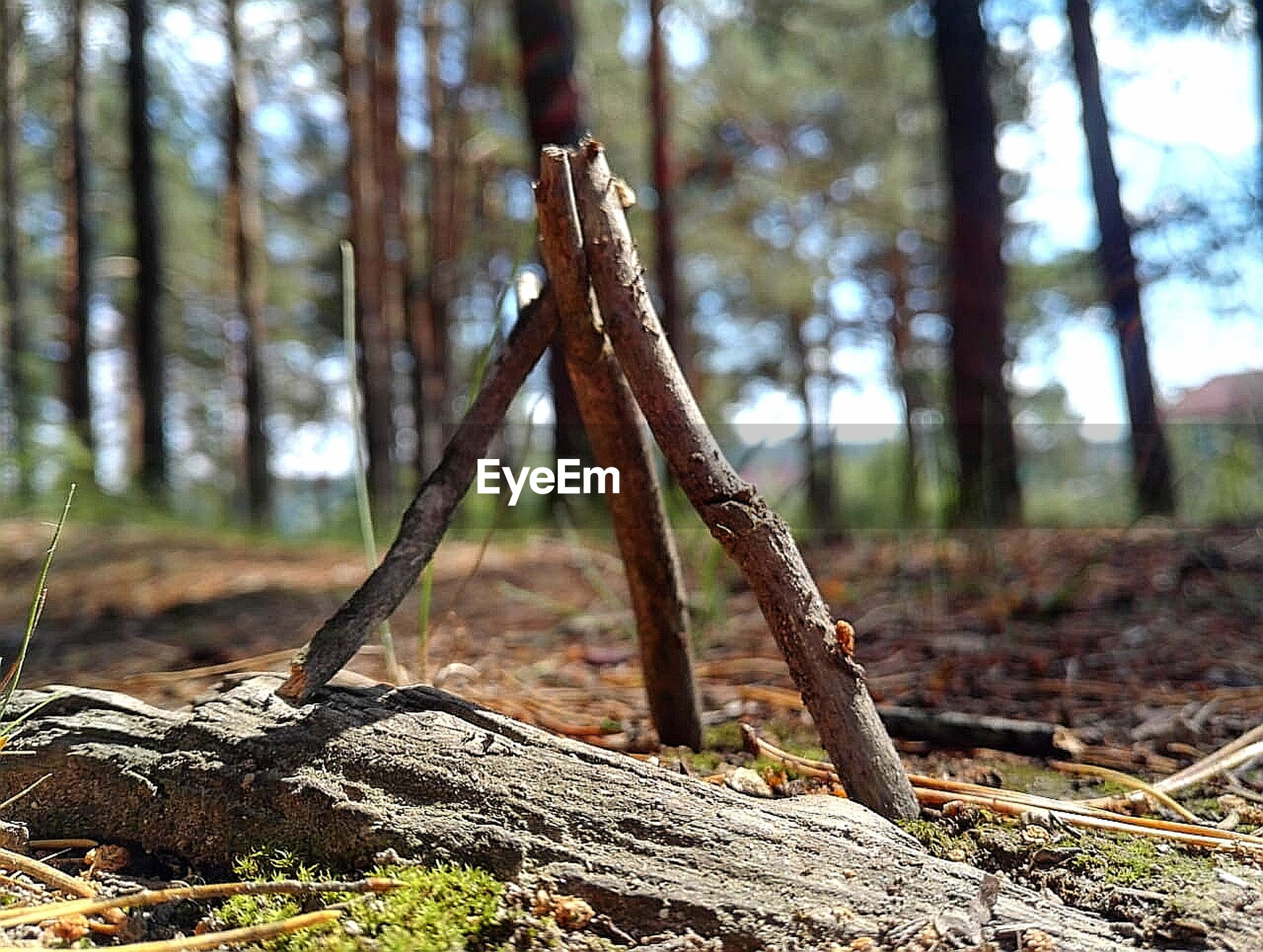 plant, land, tree, forest, focus on foreground, nature, growth, trunk, tree trunk, day, tranquility, no people, close-up, outdoors, beauty in nature, wood - material, woodland, sunlight, non-urban scene, field, dead plant