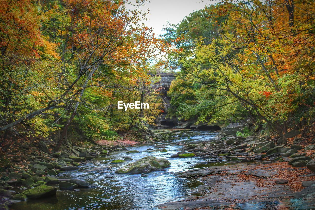 River Flowing Amidst Trees During Autumn