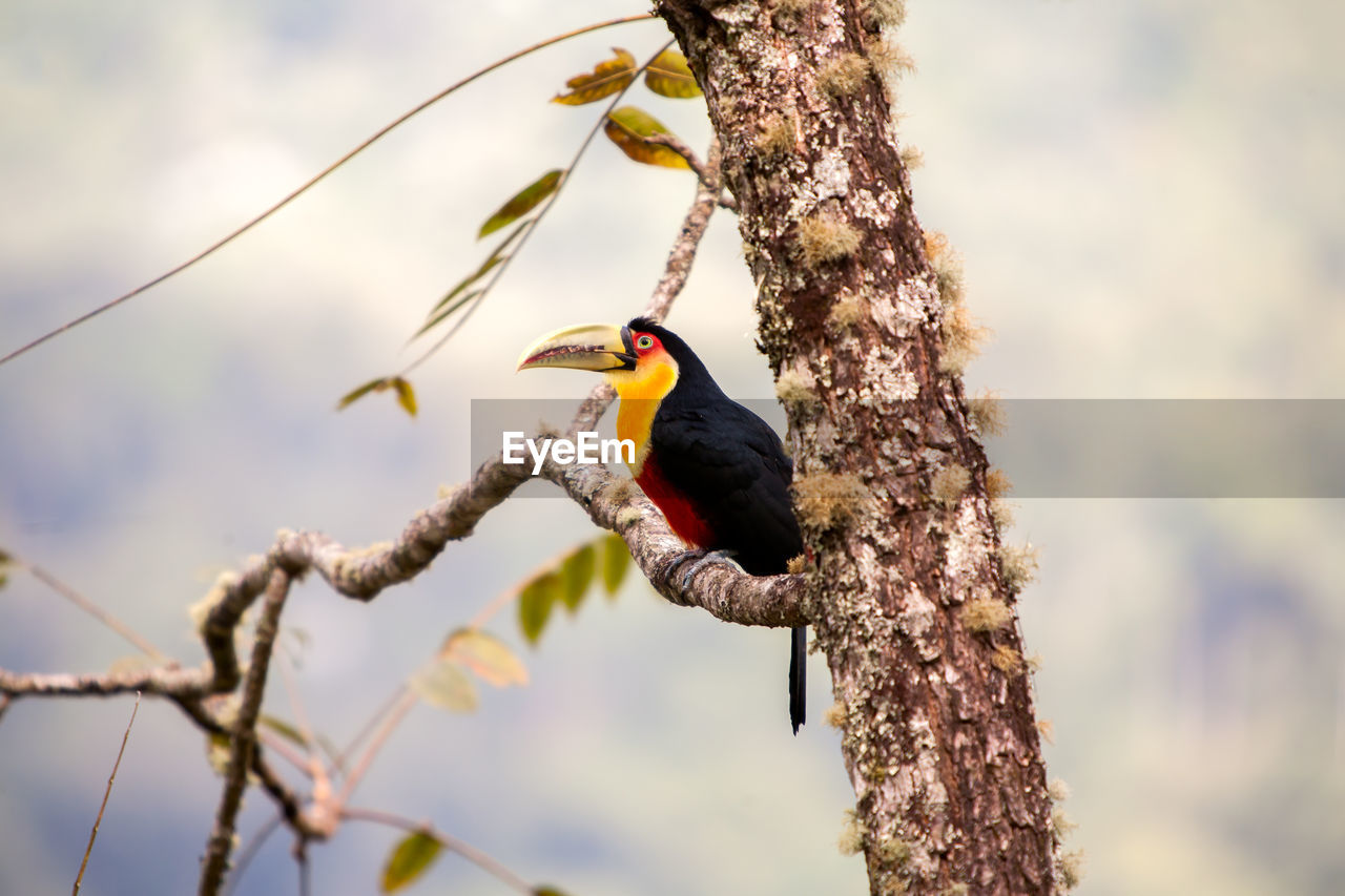 animal wildlife, animals in the wild, animal themes, animal, bird, vertebrate, tree, perching, one animal, branch, plant, focus on foreground, nature, no people, day, low angle view, outdoors, tree trunk, selective focus, beauty in nature, beak, woodpecker, lichen