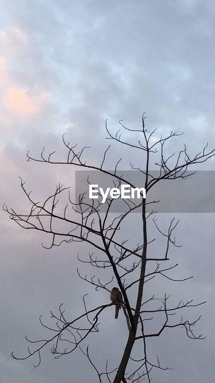 bare tree, nature, tree, branch, no people, outdoors, day, beauty in nature, sky, bird