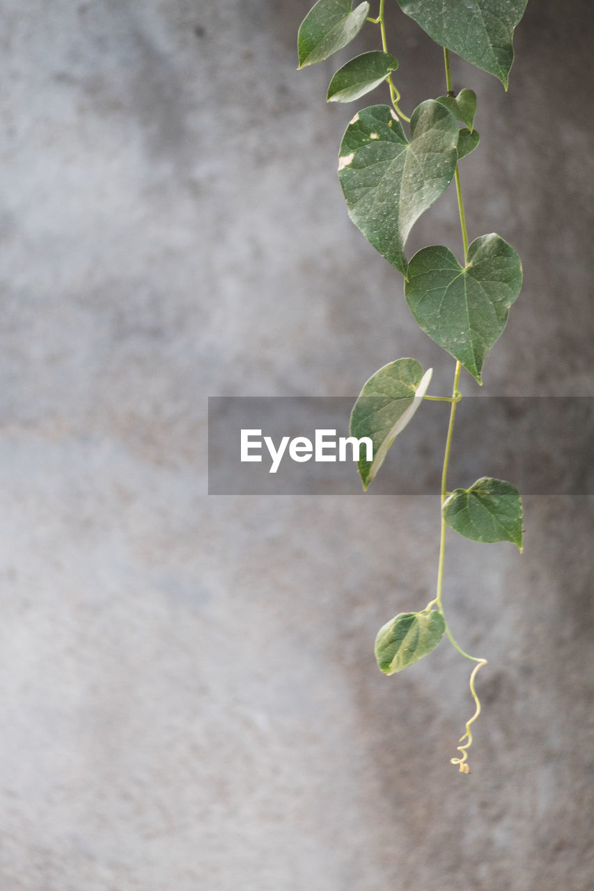 leaf, plant part, growth, green color, plant, close-up, nature, no people, beauty in nature, day, outdoors, plant stem, focus on foreground, beginnings, wall - building feature, fragility, vulnerability, freshness, tranquility, selective focus, leaves