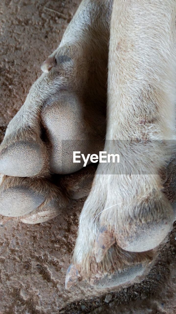 mammal, animal, animal themes, one animal, animal leg, animal body part, paw, domestic animals, domestic, pets, vertebrate, close-up, no people, relaxation, canine, dog, animal hair, hair