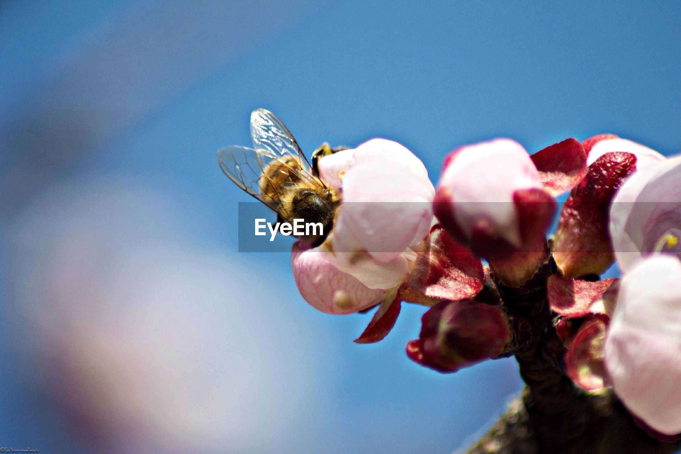 animal themes, animals in the wild, wildlife, insect, one animal, close-up, low angle view, focus on foreground, selective focus, clear sky, day, perching, no people, bird, blue, outdoors, copy space, two animals, nature, bee