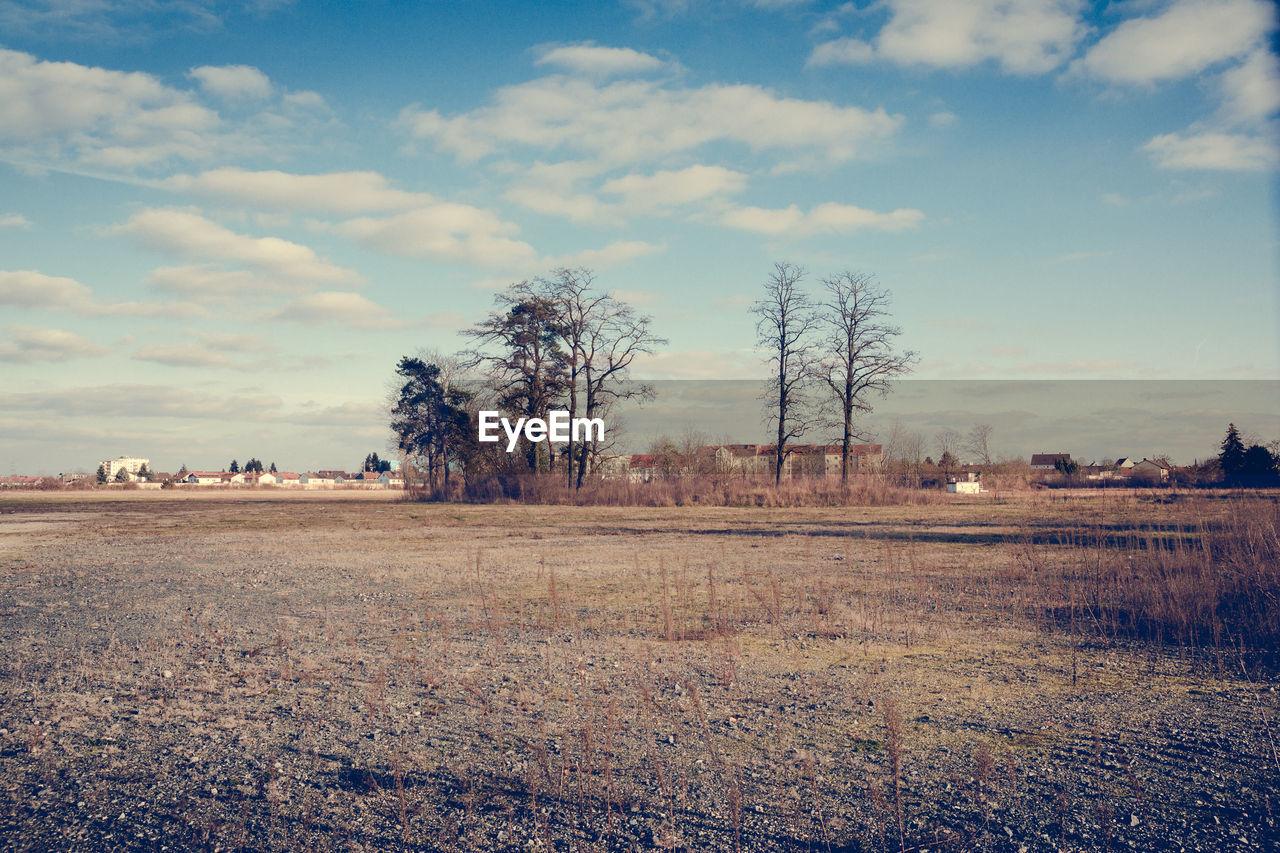 Distance shot of bare trees on landscape against sky