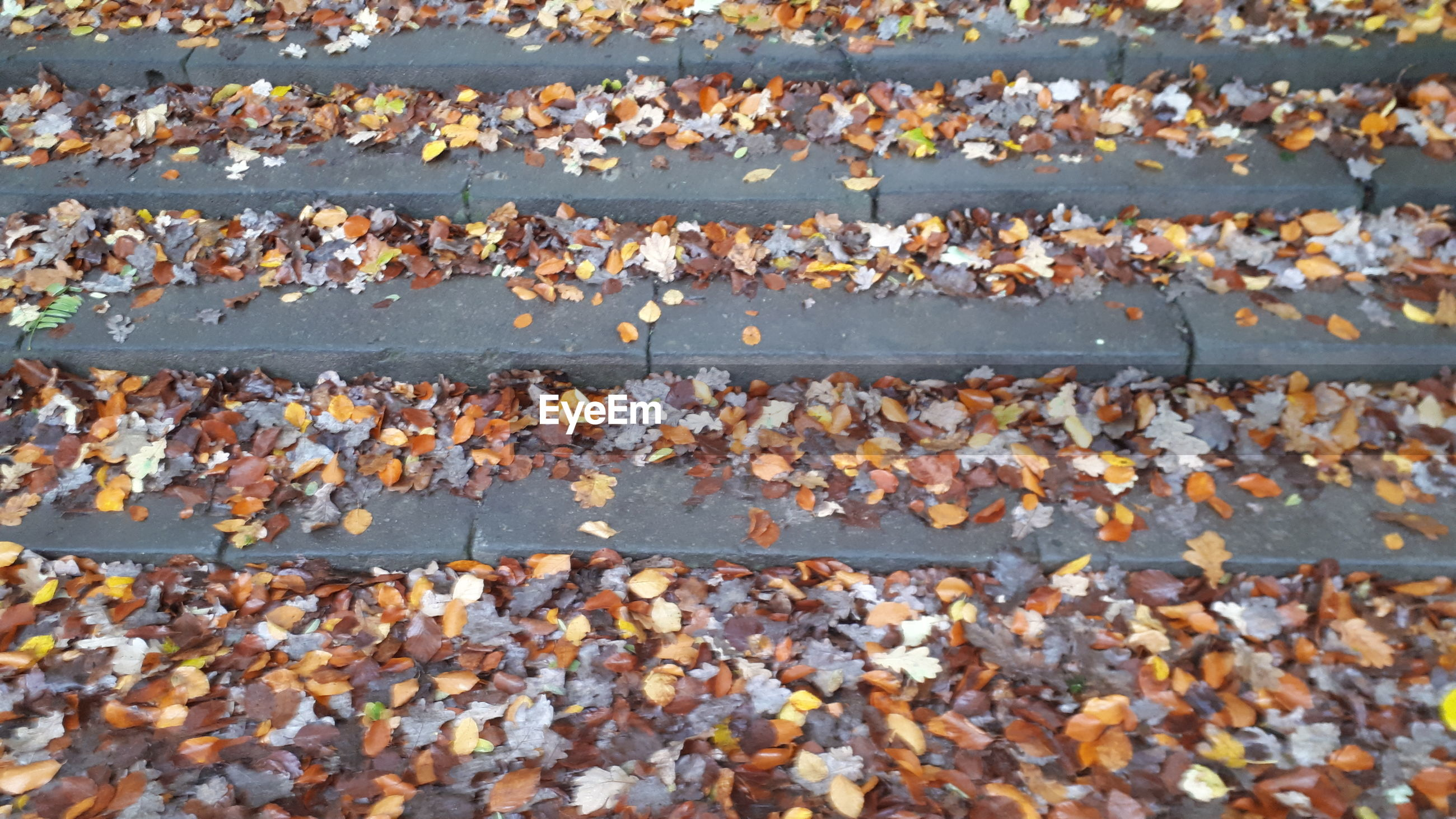 High angle view of leaves fallen on land during autumn